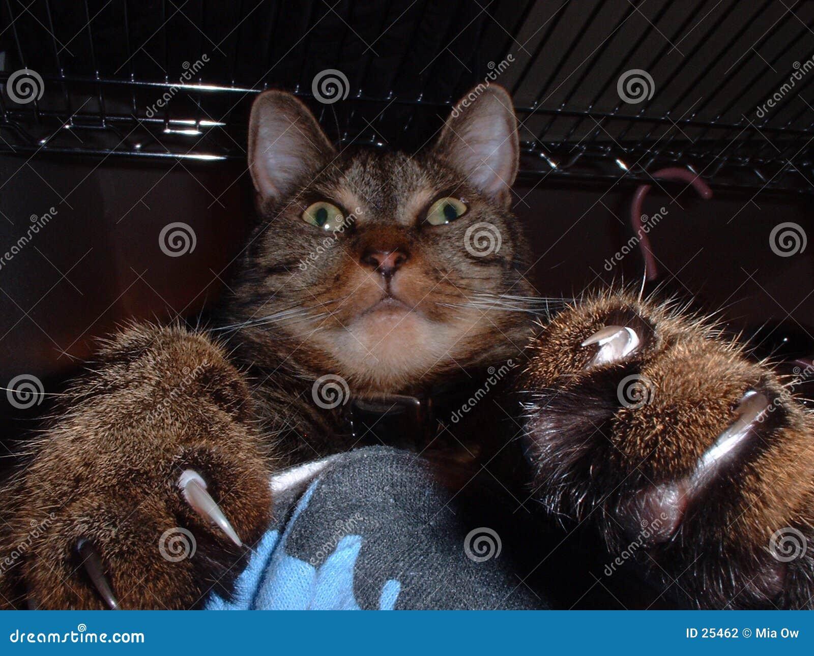 Gato con las garras 1