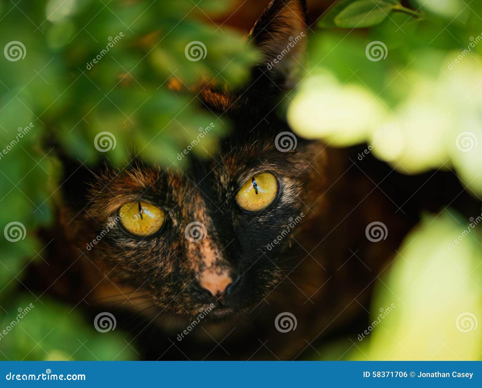 Gato da concha de tartaruga na folha