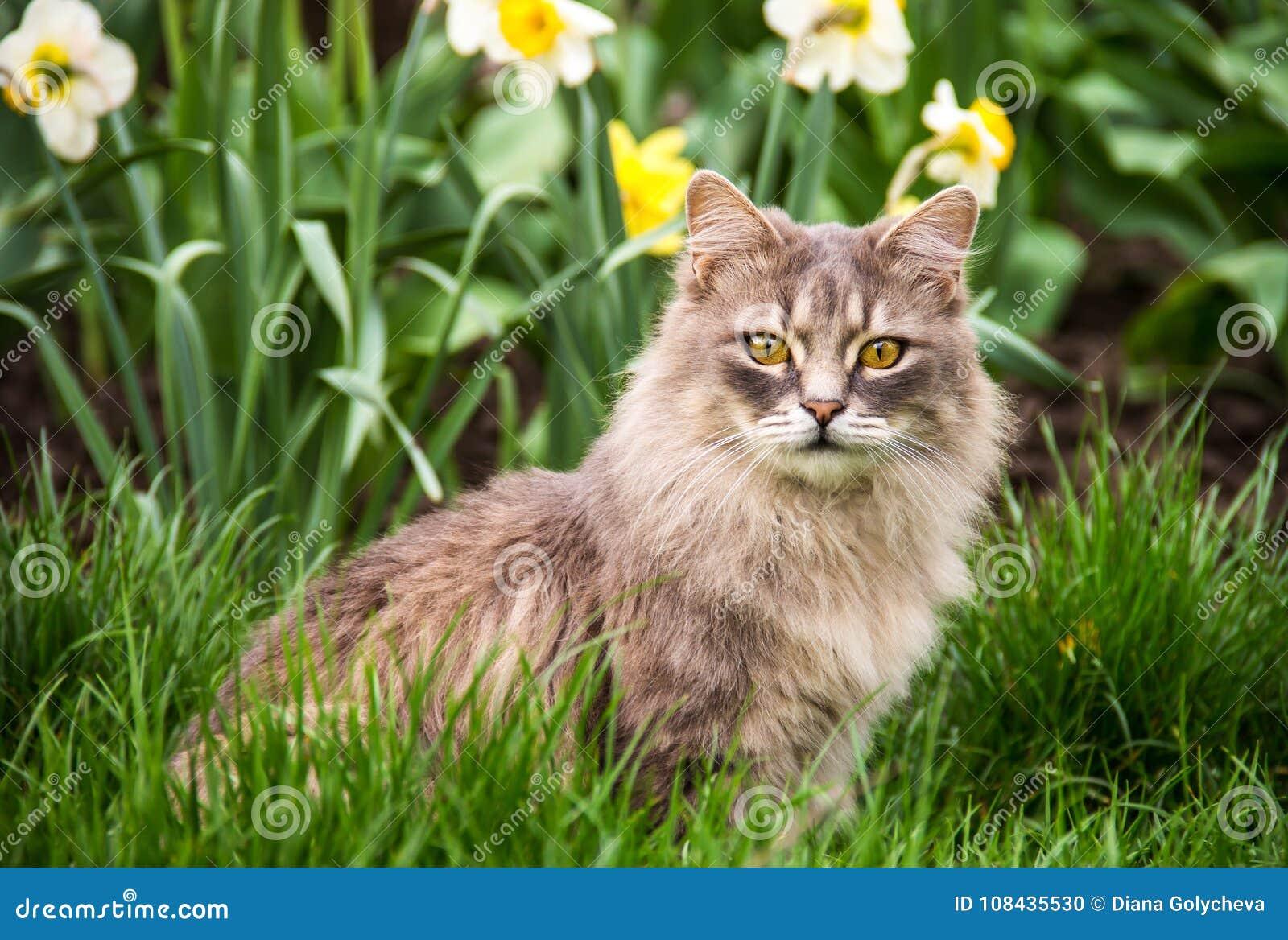 Gato da rua na cama de flor O gato macio cinzento está sentando-se na grama verde