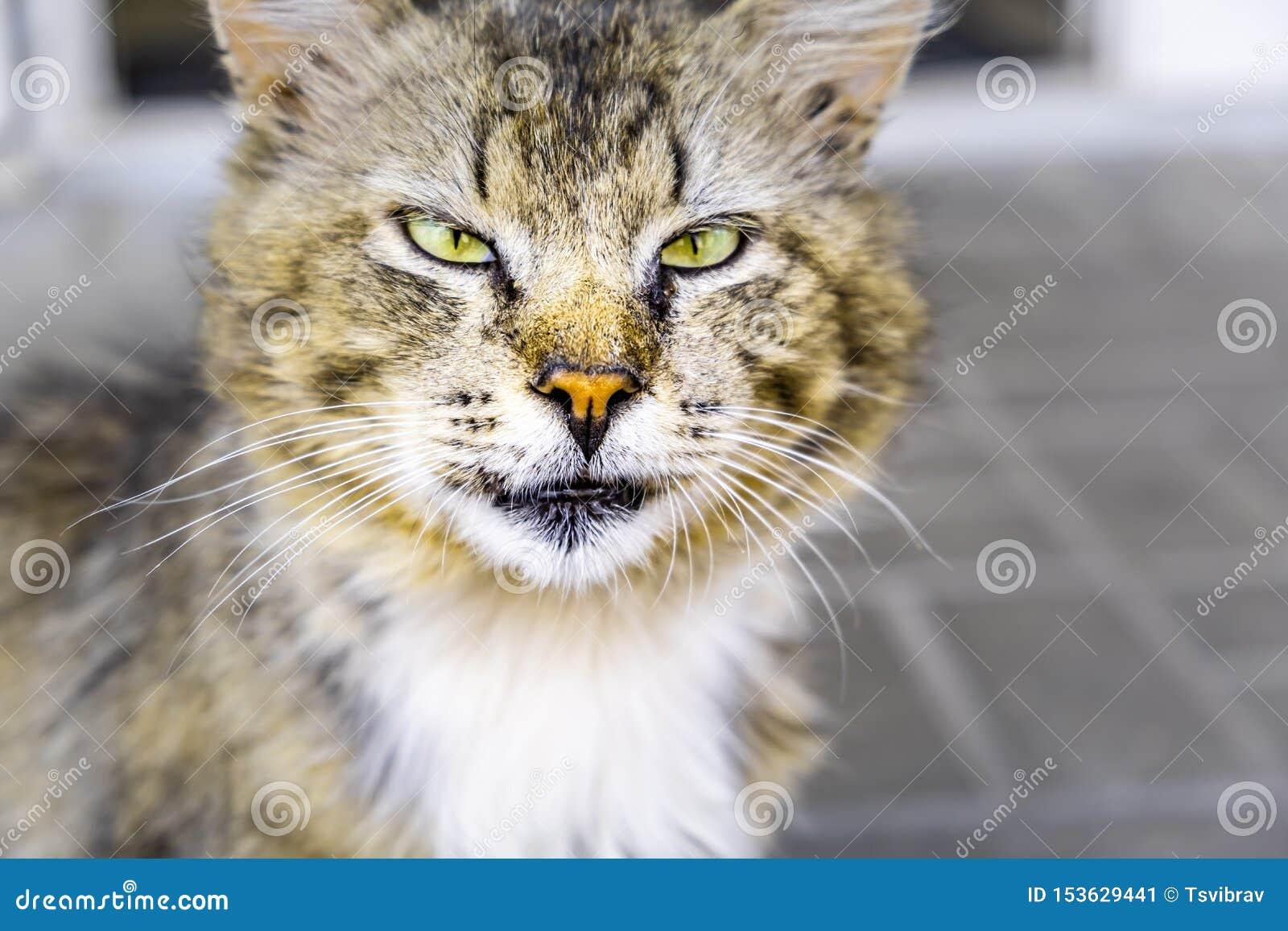 Gato da rua que é vesgo seriamente na câmera
