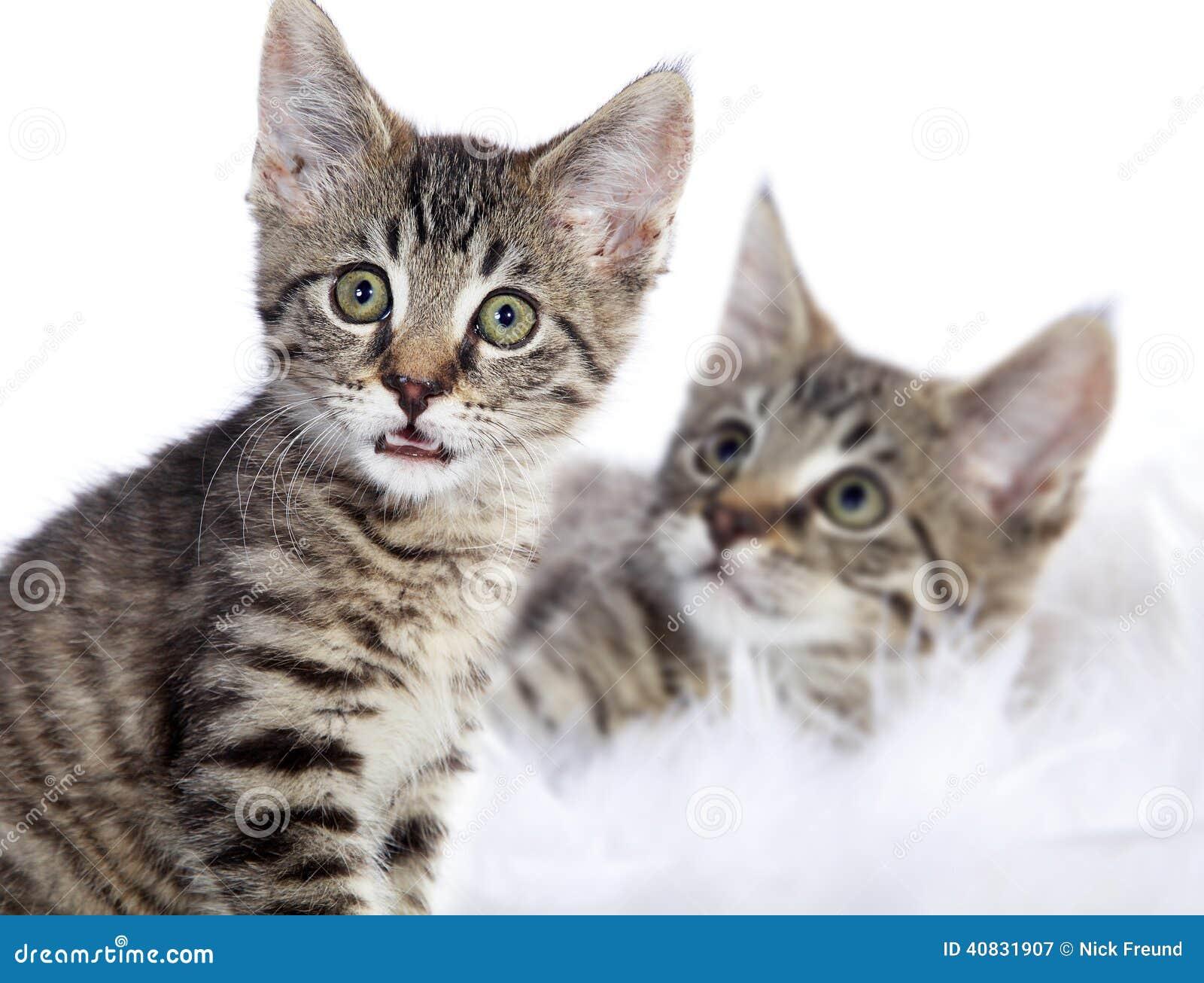 Gato de casa del beb con el modelo del tigre foto de - El gato en casa ...