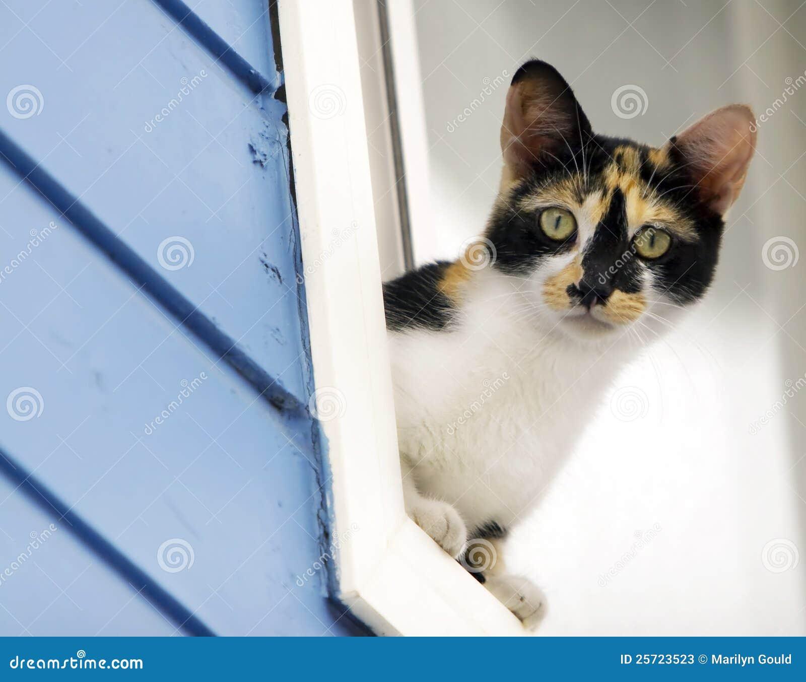 Gato de chita que inclina-se fora do indicador