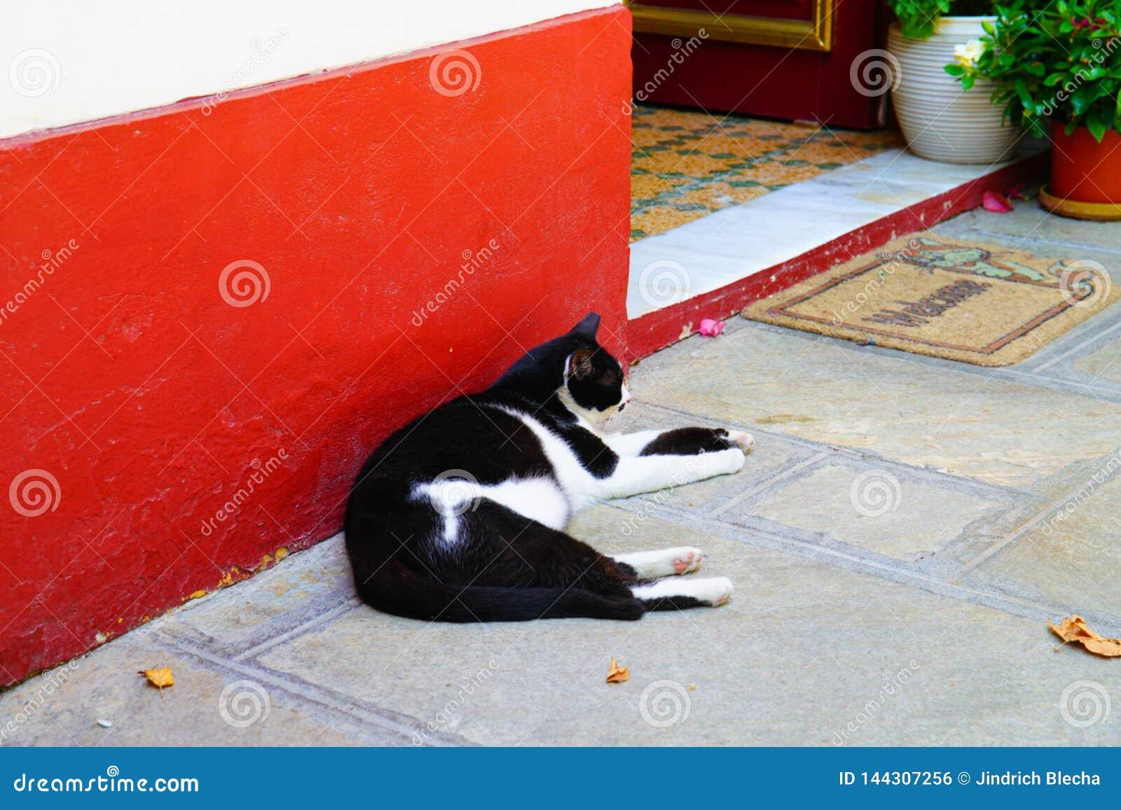 Gato de descanso, Skopelos, Grécia