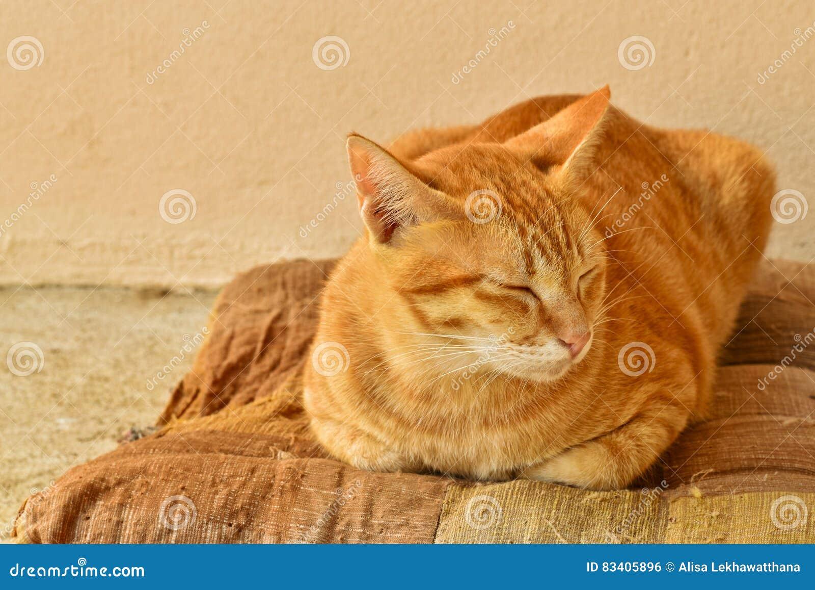 Gato de gato atigrado anaranjado so oliento en el - El gato en casa ...