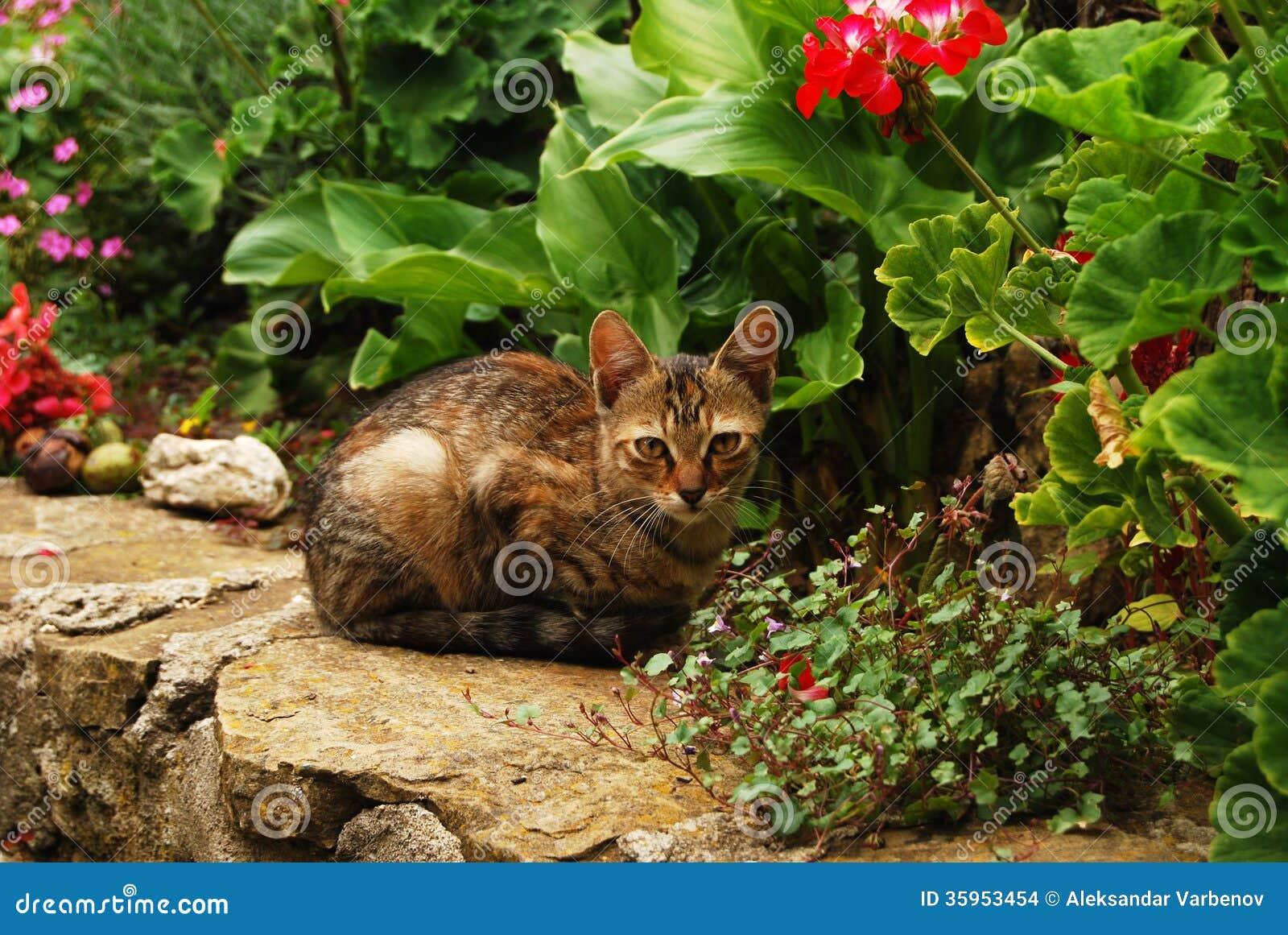 Gato de gato atigrado en jardín