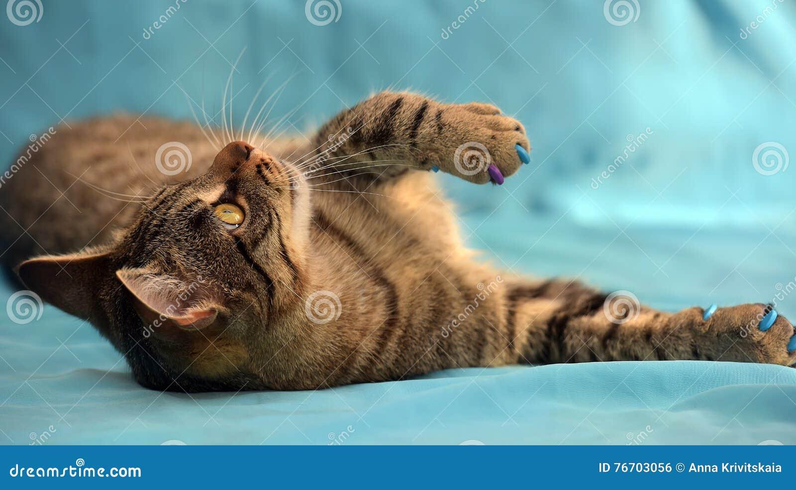 Gato de gato atigrado joven hermoso