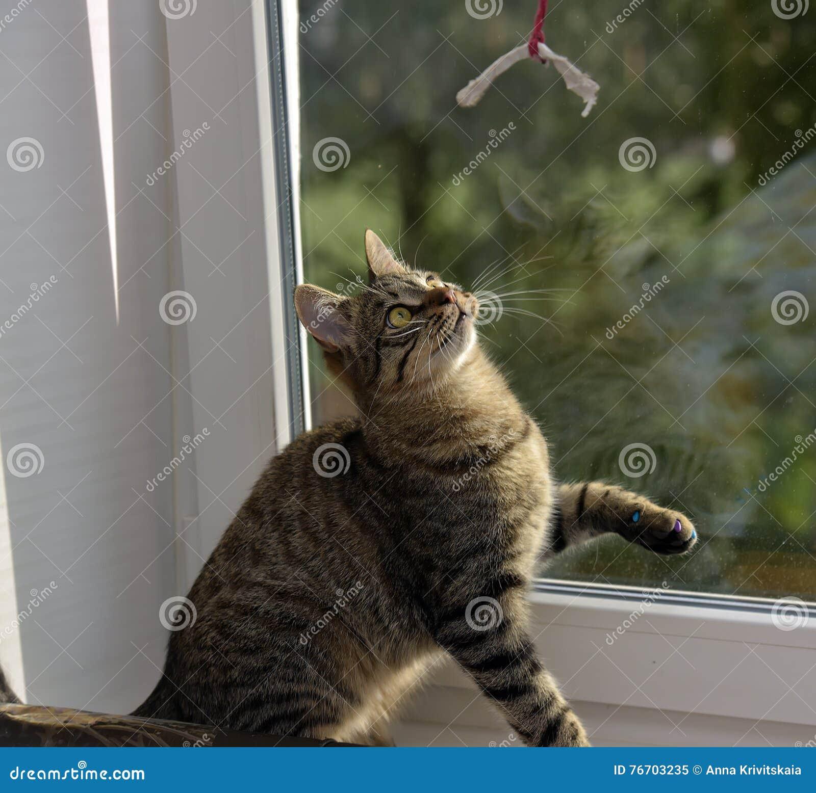 Gato de gato malhado considerável novo em casa