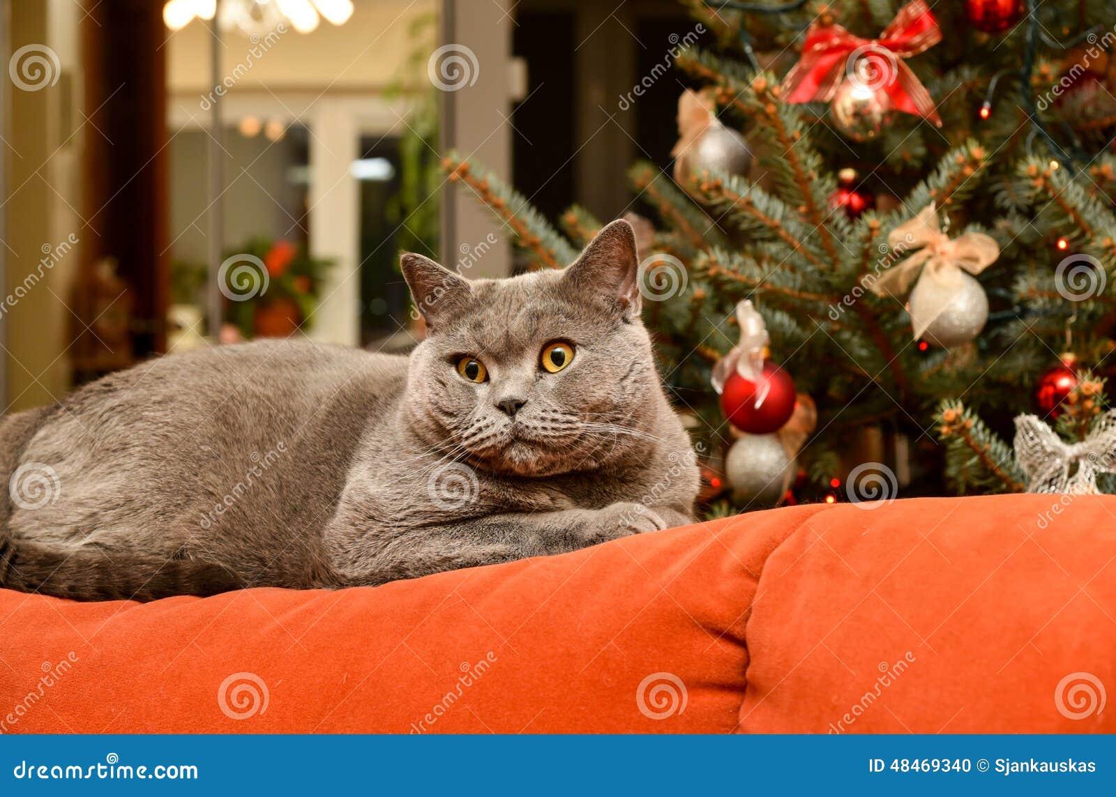 Gato de la Navidad en el sofá