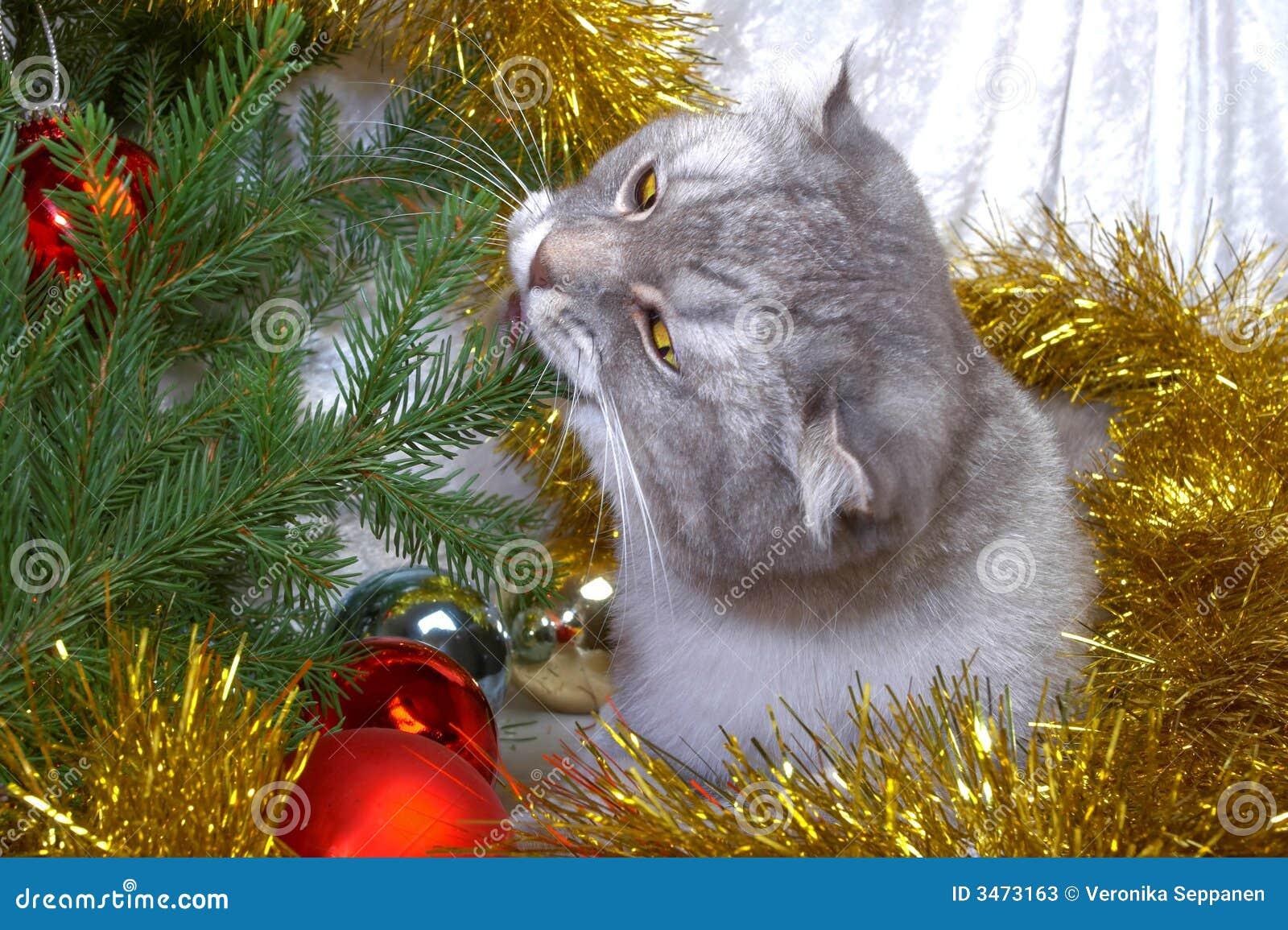 Gato de la Navidad entre un piel-árbol