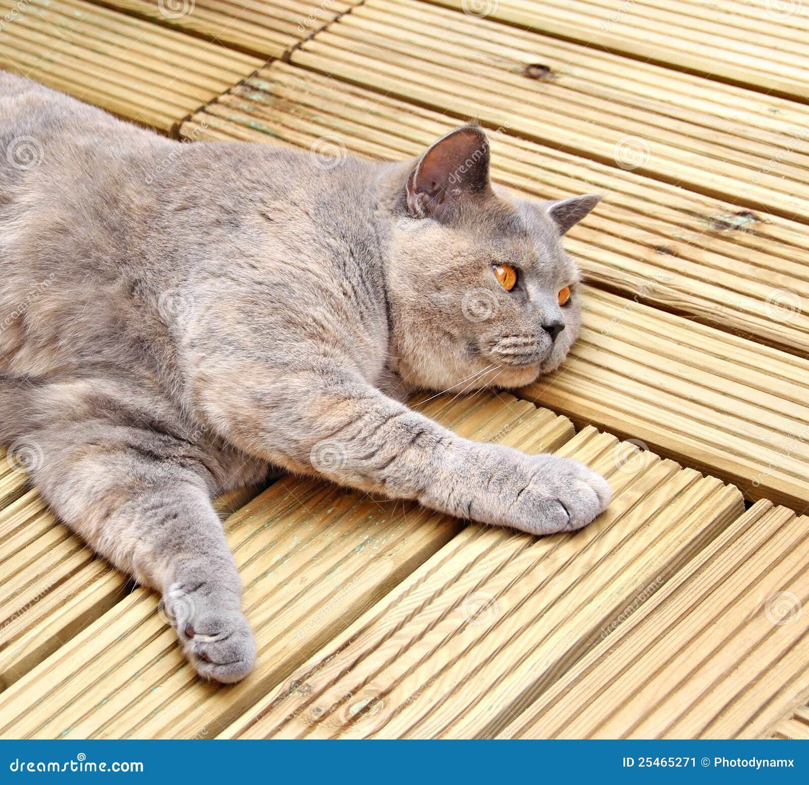 Gato de lujo del decking