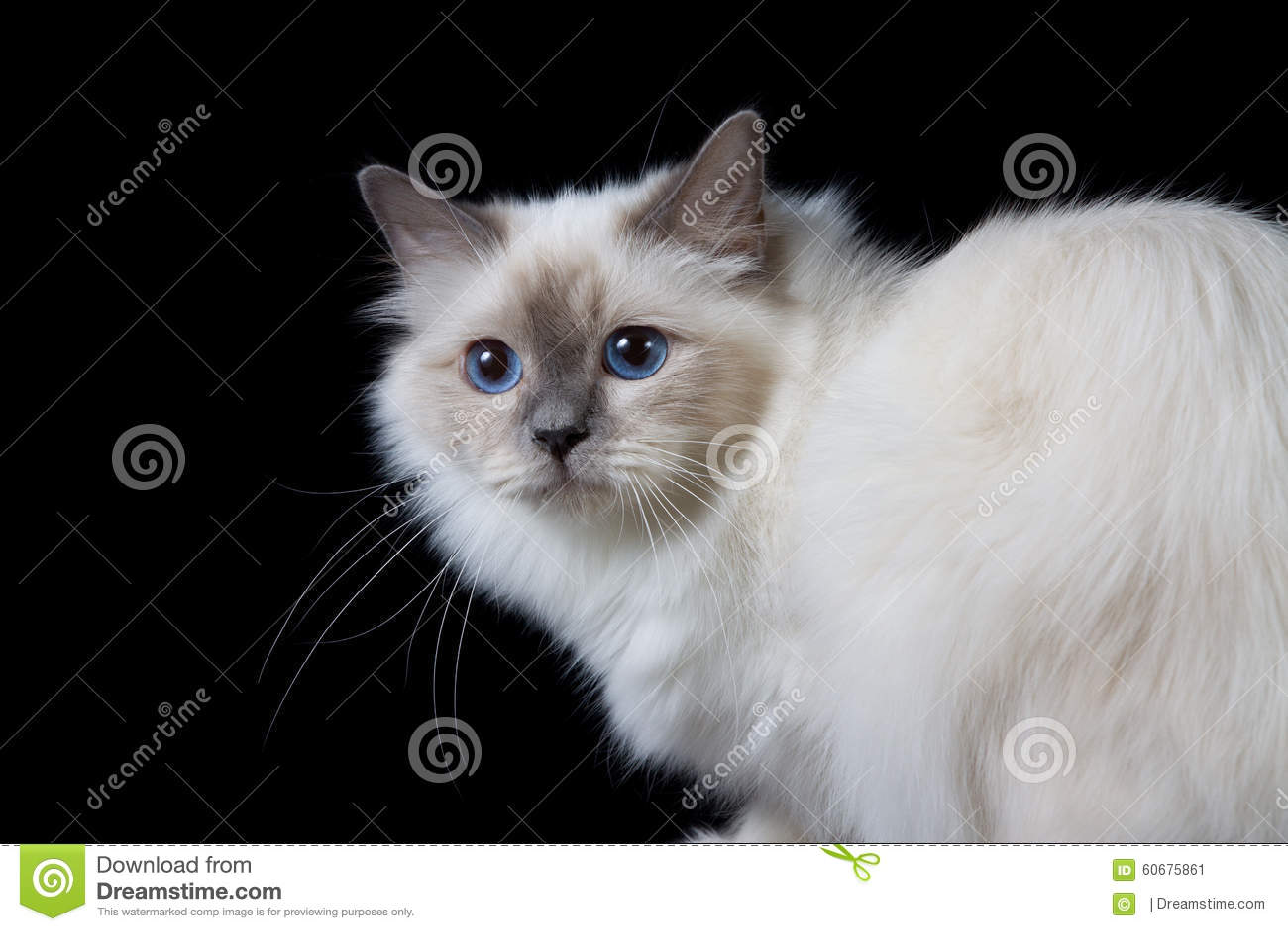 Resea y sinopsis de Los ojos azules pelo negro