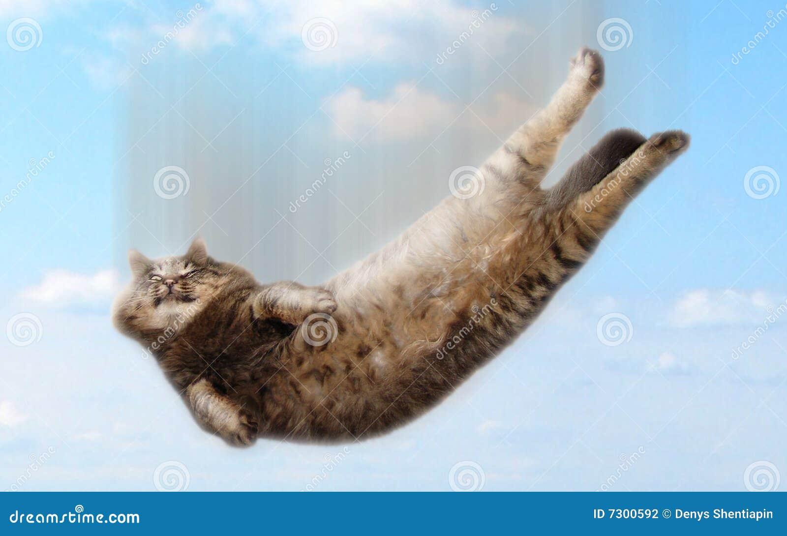 Gato de queda engraçado