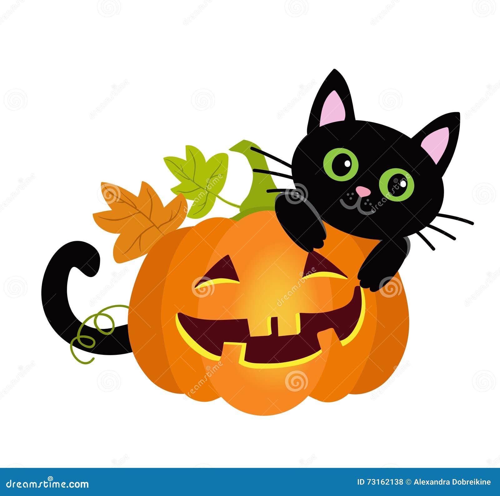 Gato del gatito de halloween y calabazas divertidas - Calabazas halloween originales para ninos ...