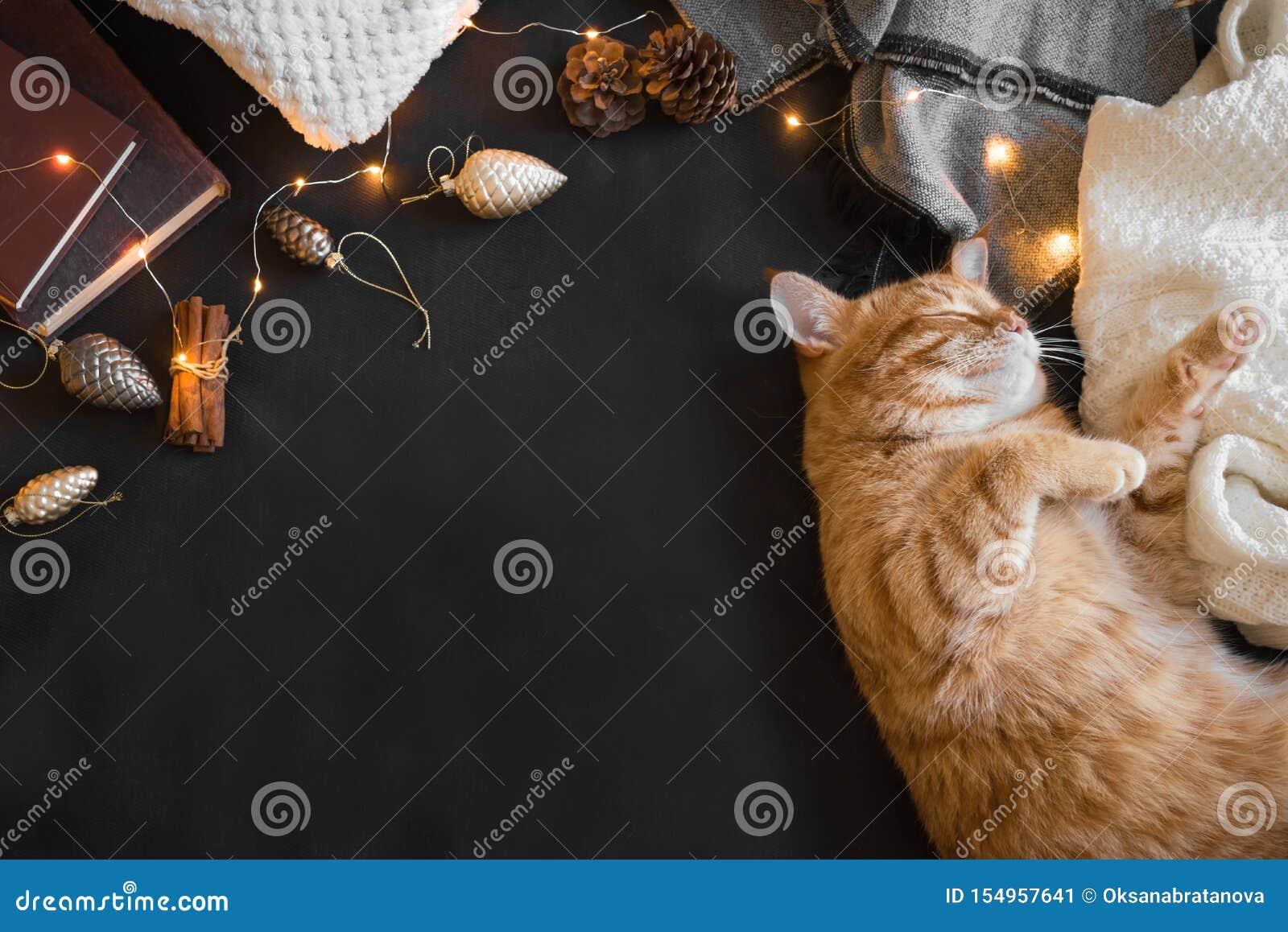 Gato del jengibre de la Navidad