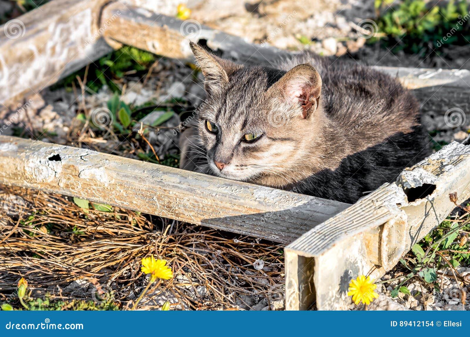 Gato desabrigado que encontra-se no prado