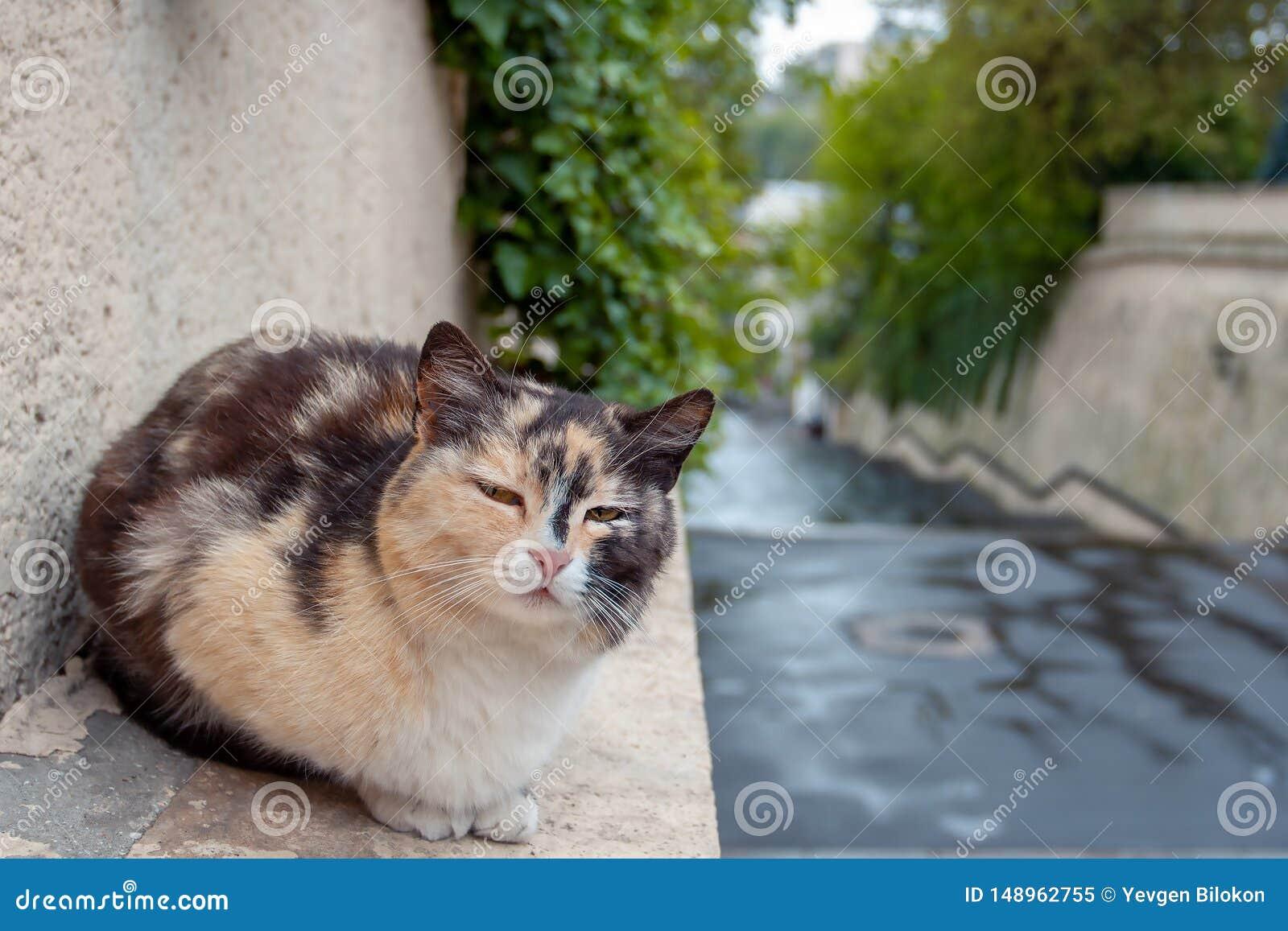 Gato disperso apenas na rua ap?s a chuva