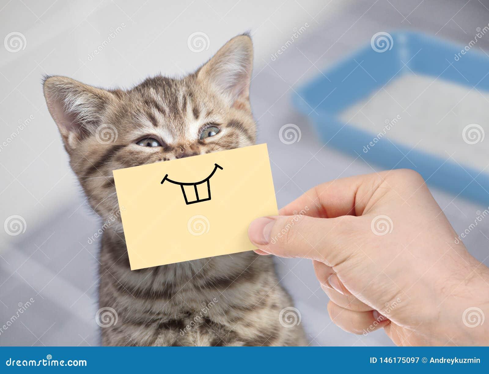 Gato divertido con la sonrisa loca que se sienta cerca de retrete limpio