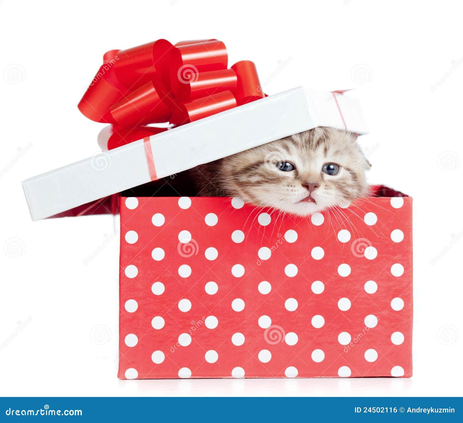 Gato divertido del bebé en rectángulo de regalo rojo