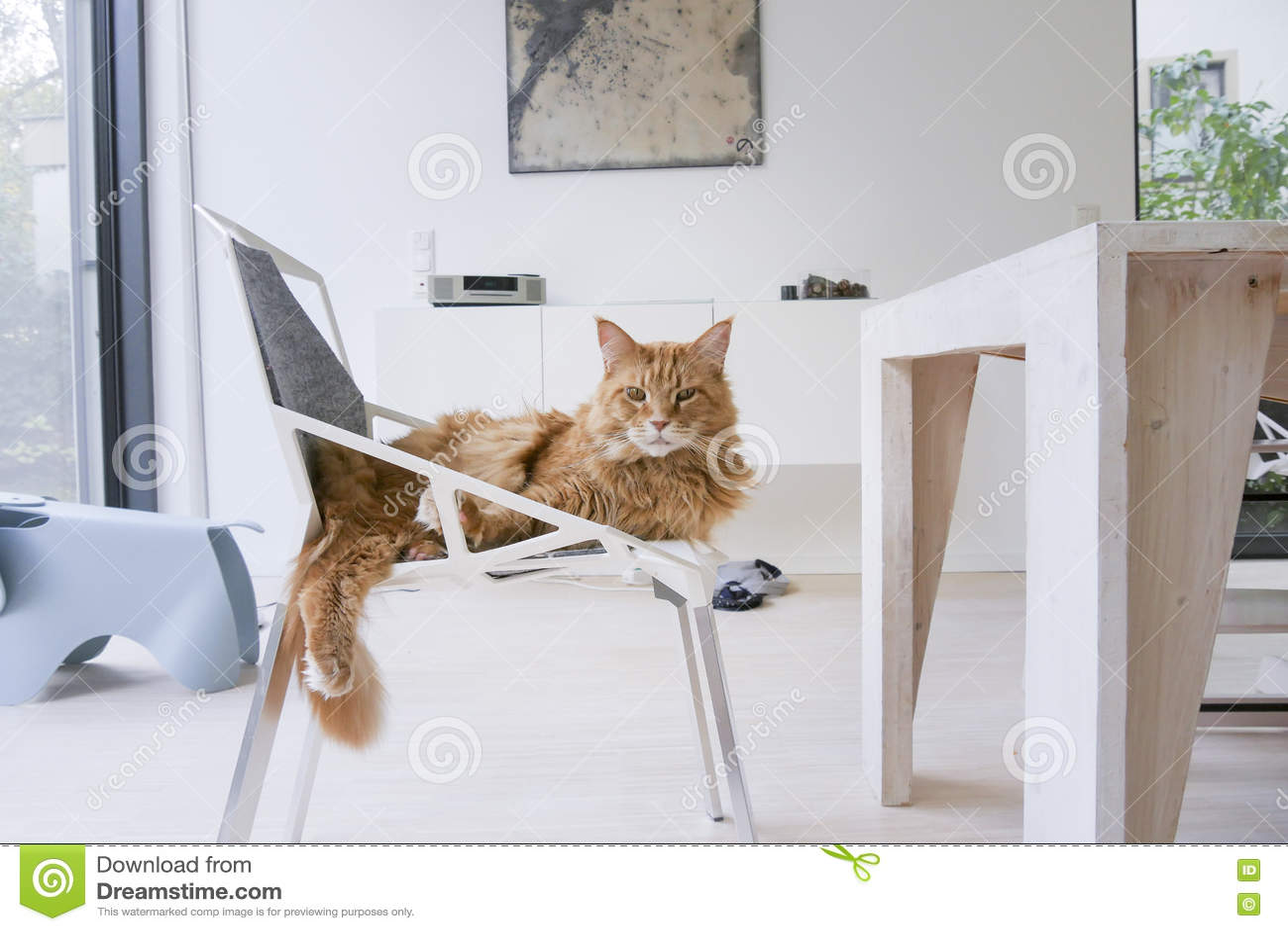 Gato do gengibre na casa moderna