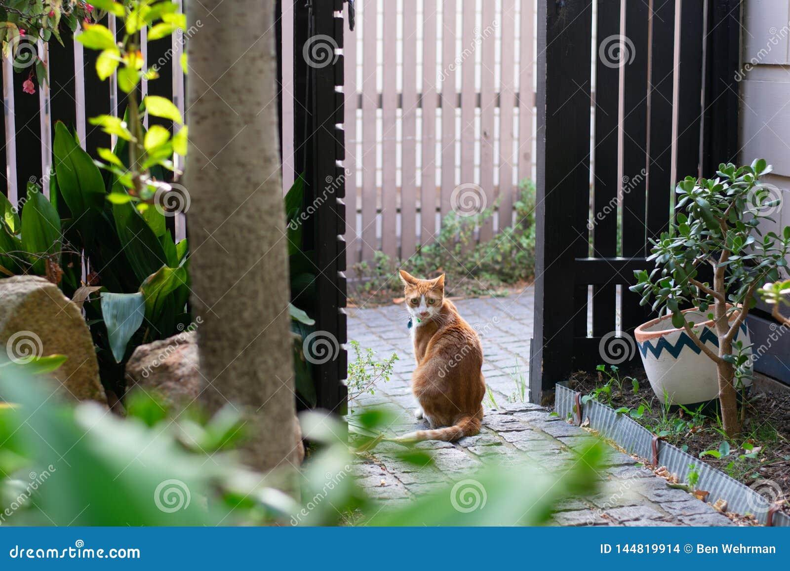 Gato do gengibre no jardim