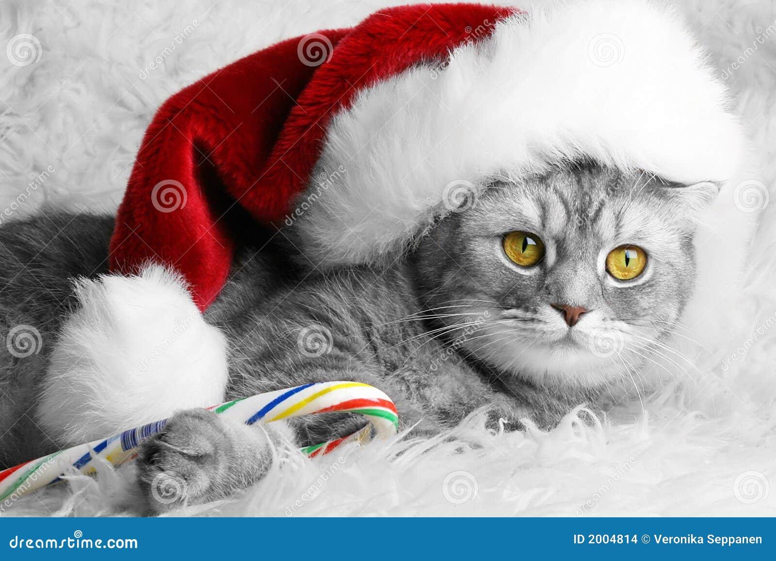 Gato do Natal