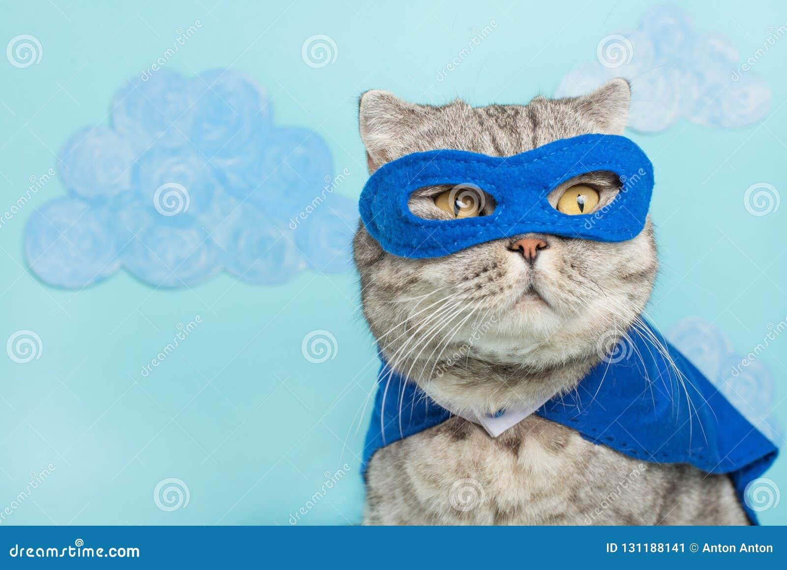 Gato do super-herói, Whiskas escocês com um casaco e uma máscara azuis O conceito de um super-herói, gato super, líder