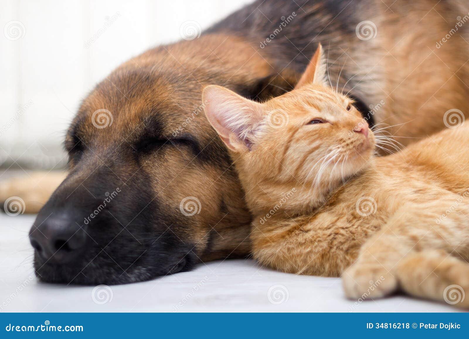 Gato e cão que dormem junto