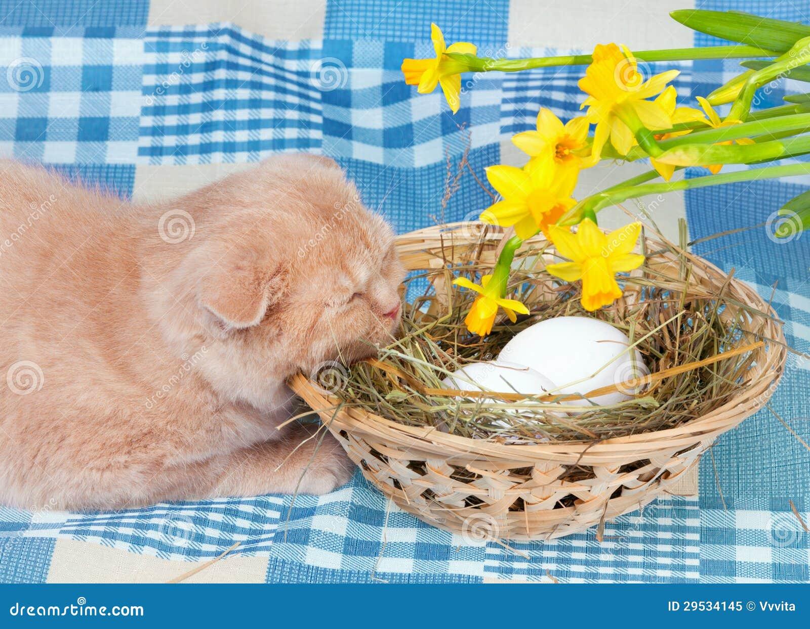 Gato e ovos da páscoa