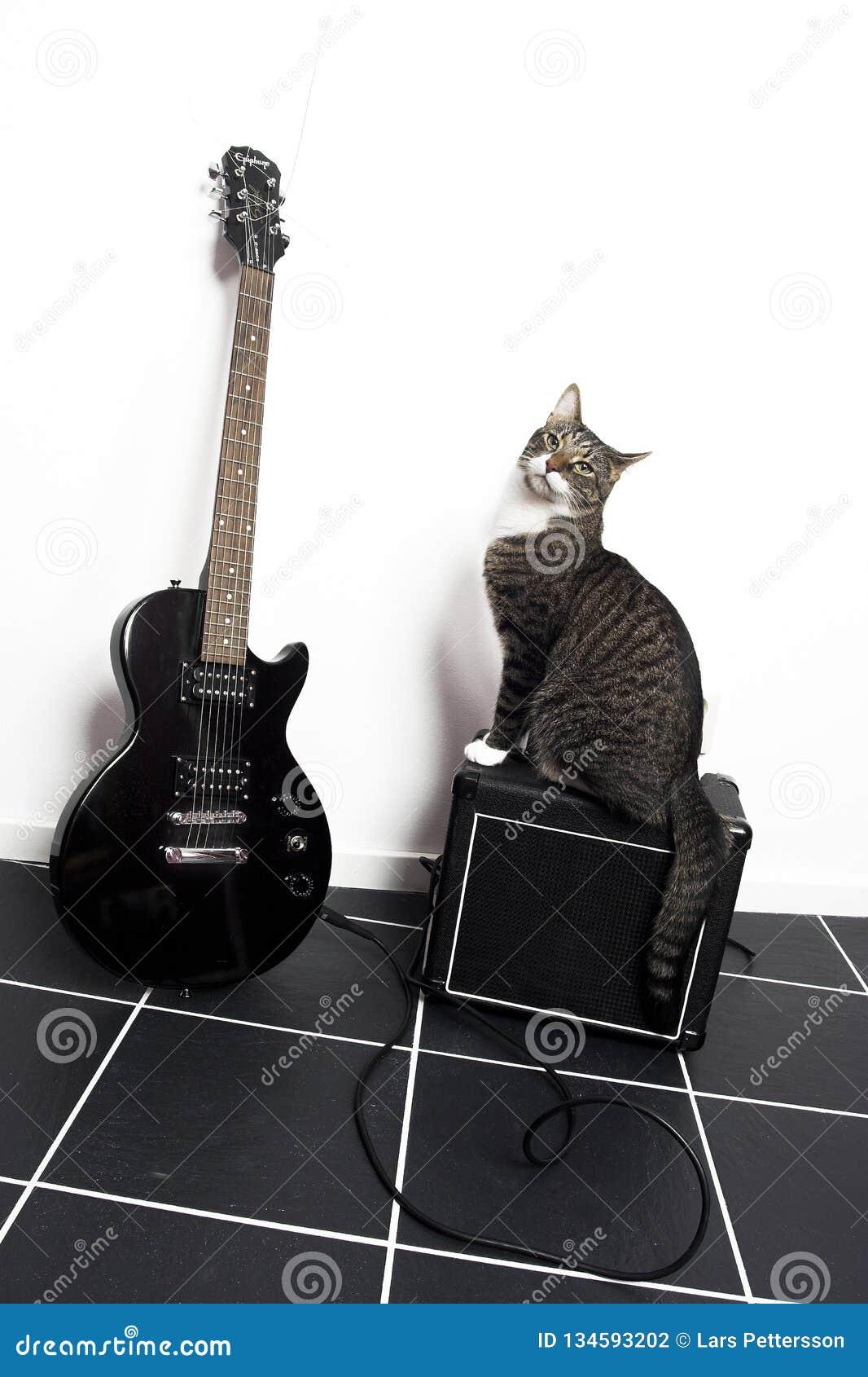 Gato e uma guitarra