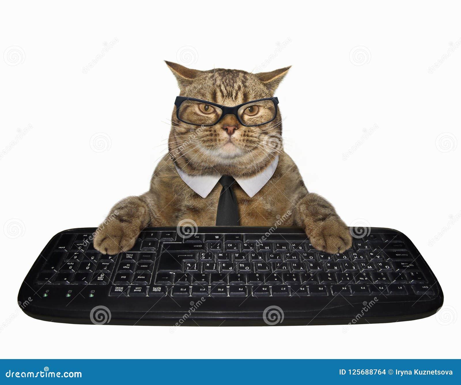 Gato em um laço com teclado de computador