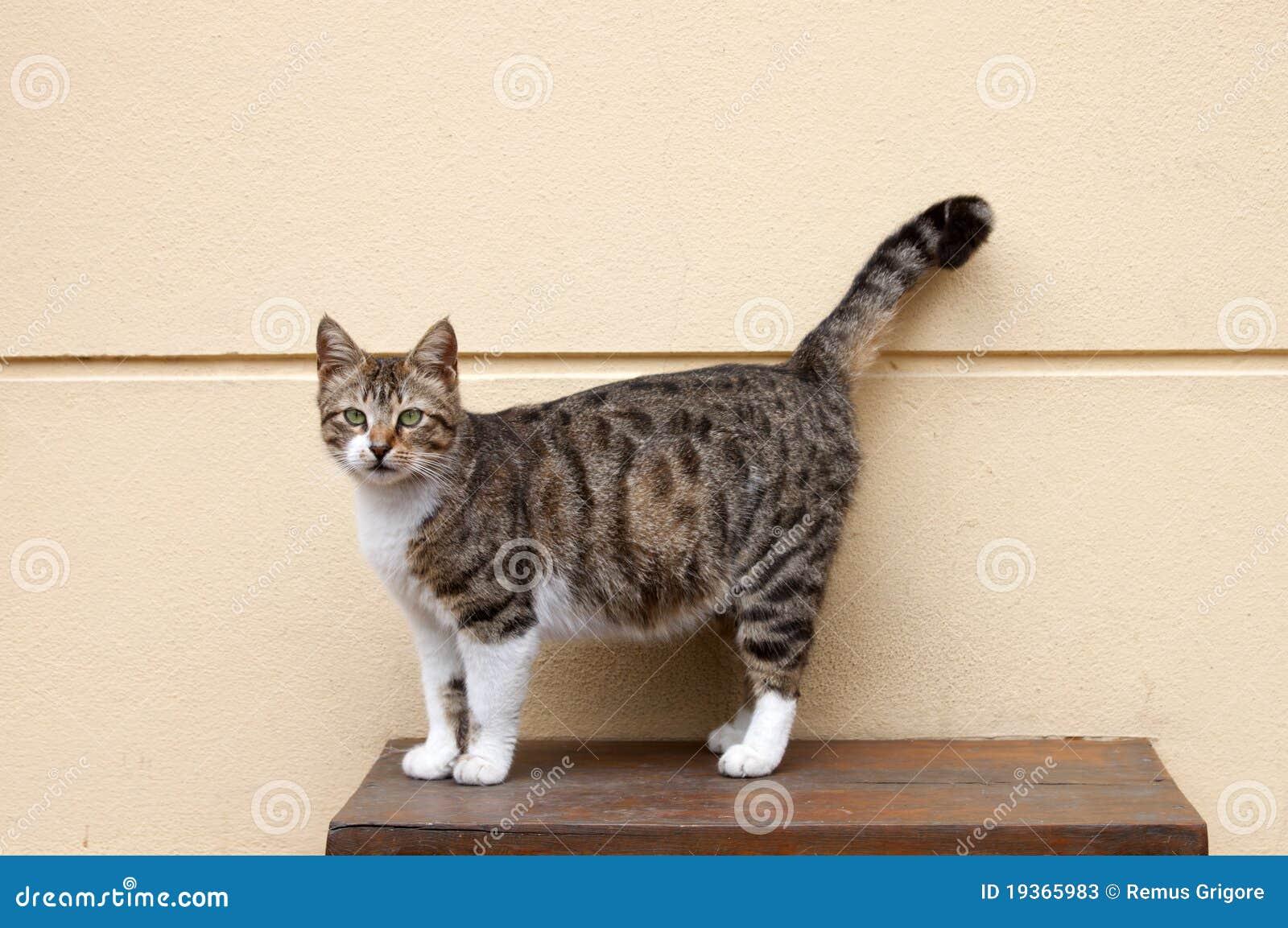 Gato em uma tabela