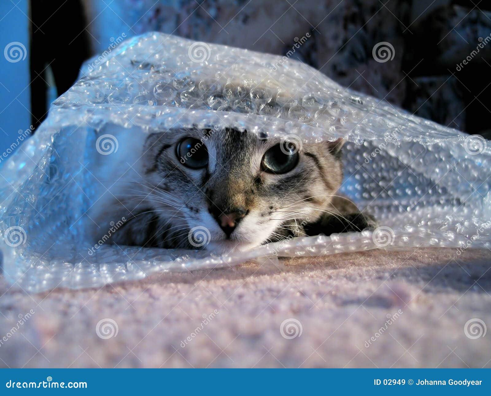Gato en abrigo de burbuja