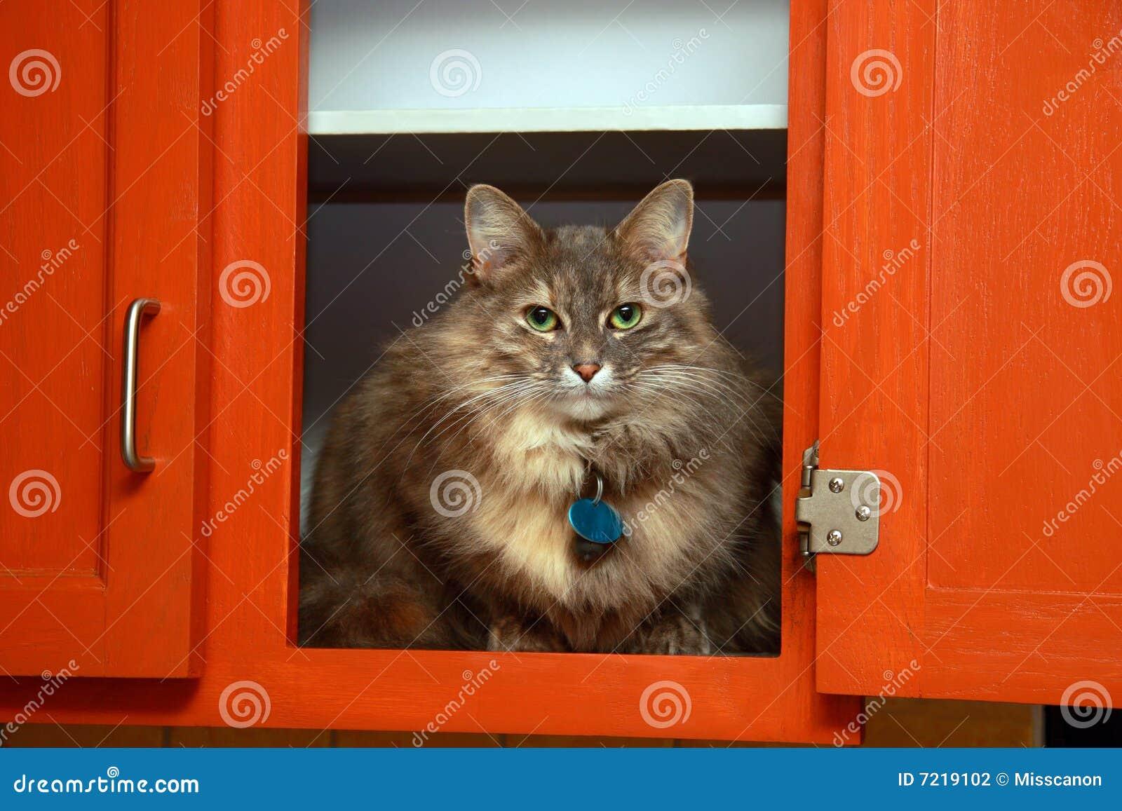 Gato en armario