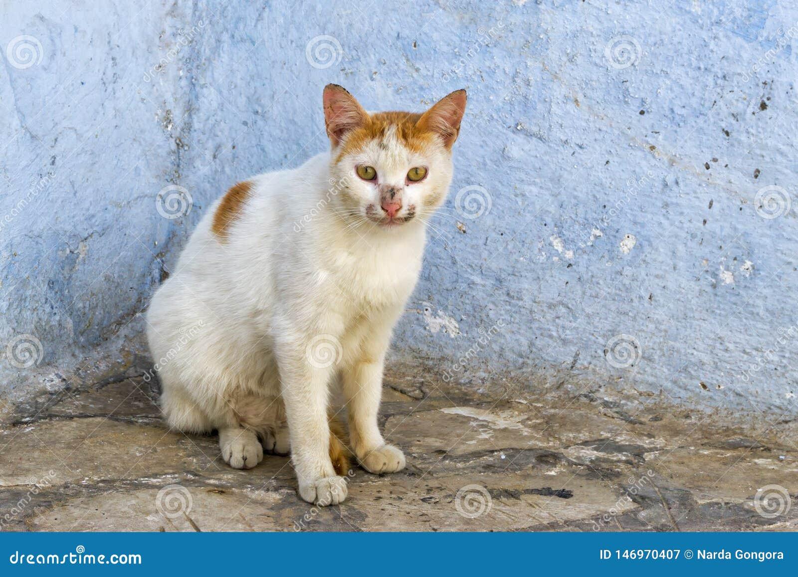 Gato en calle en Kairouan, Túnez