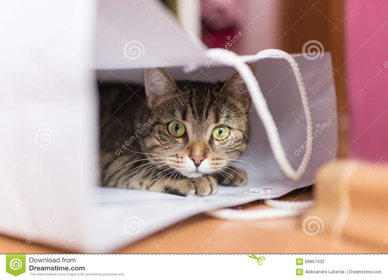 Gato en el bolso blanco