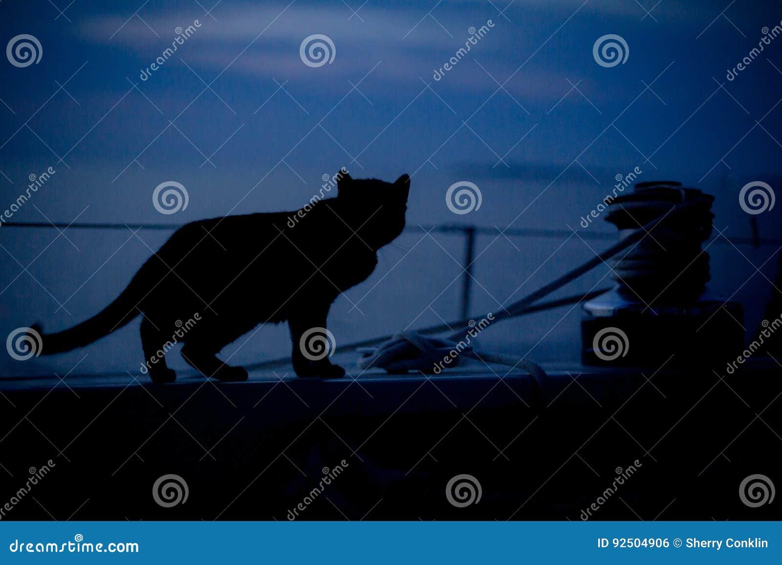 Gato en el velero en la oscuridad en el puerto de la isla de Cuttyhunk, Massachus
