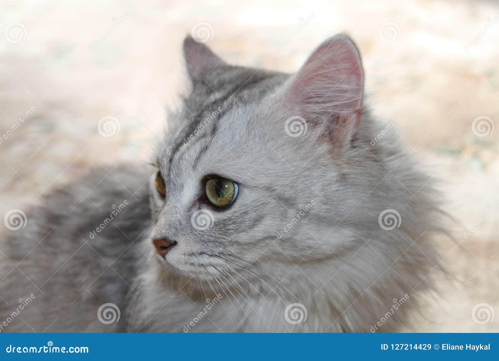 Gato en fondo en colores pastel