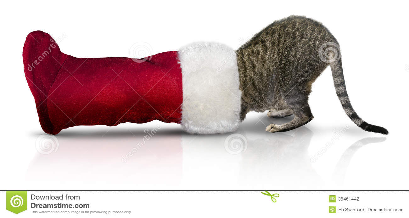 Gato en la media de la Navidad