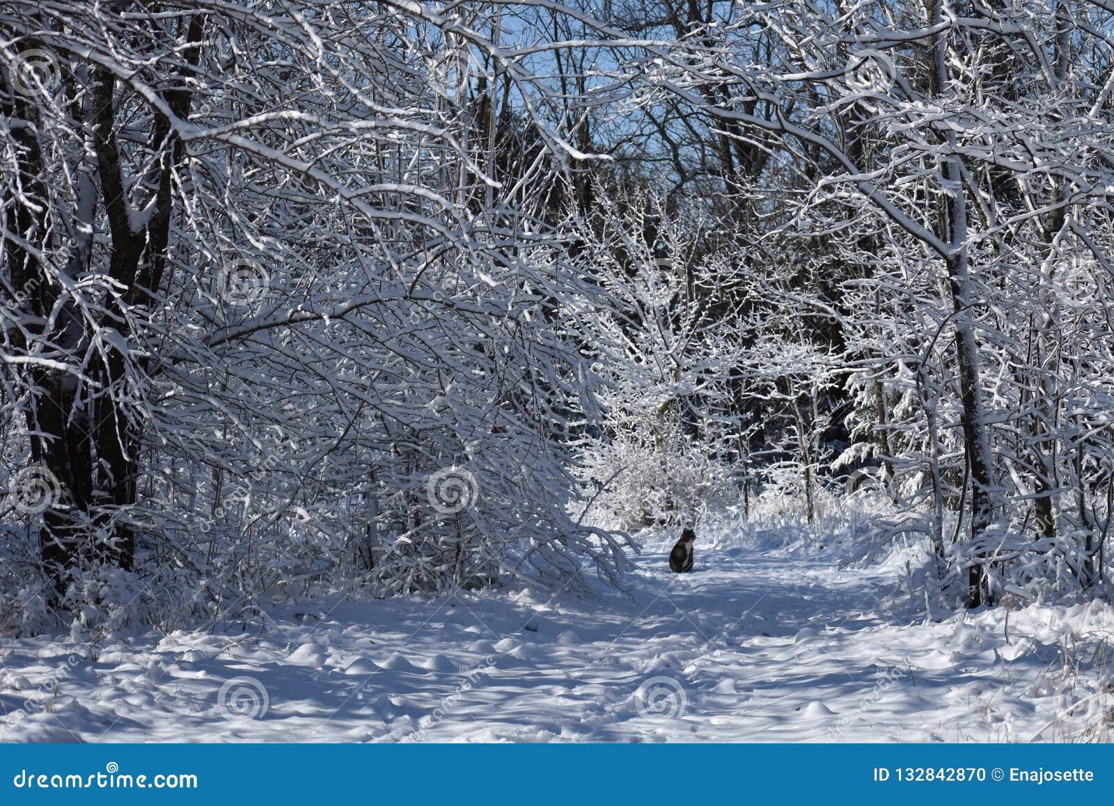 Gato en rastro de la nieve