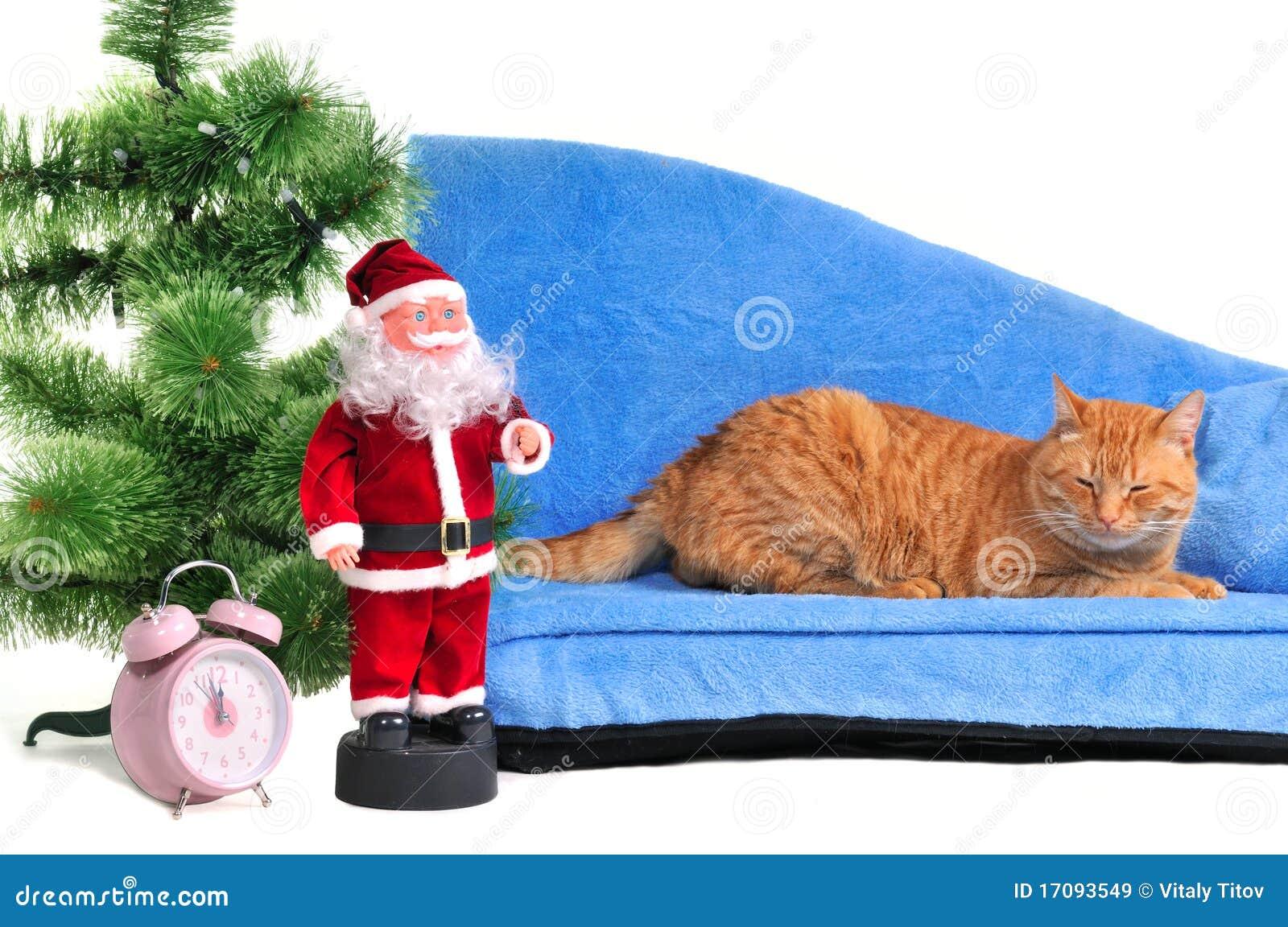 Gato en un sofá de la Navidad