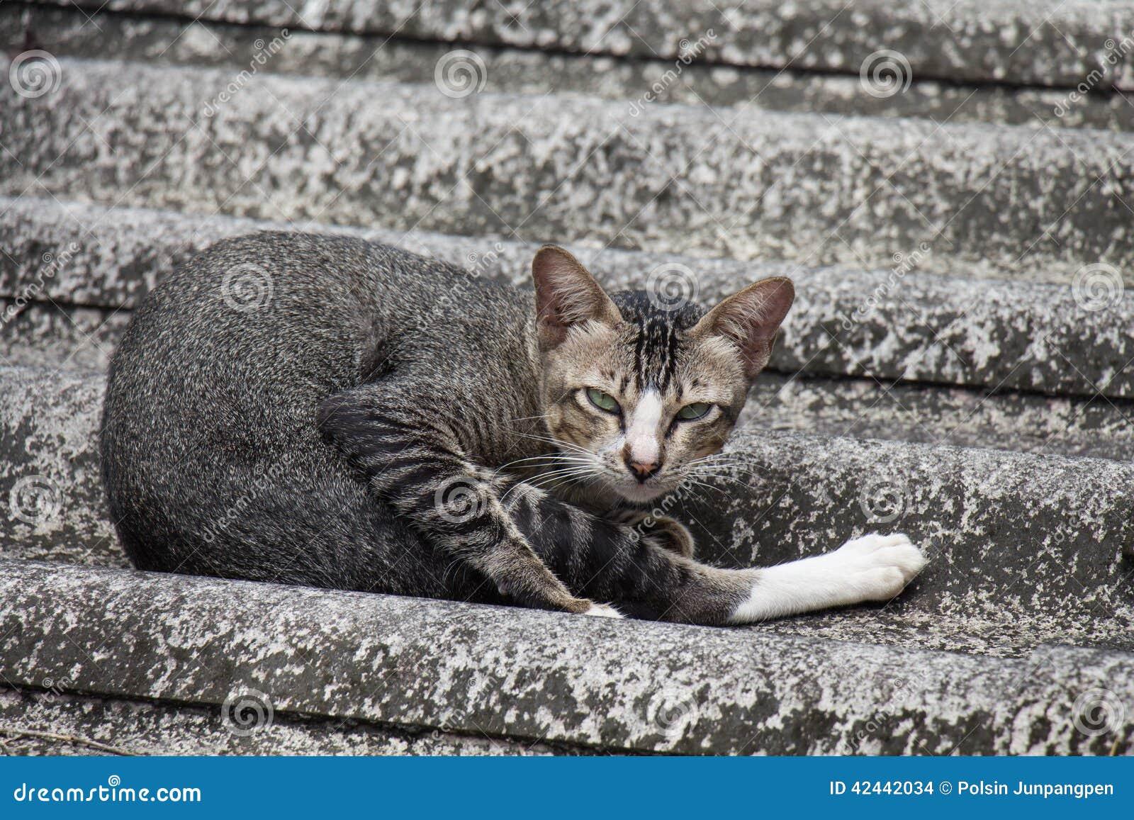 Gato en una azotea