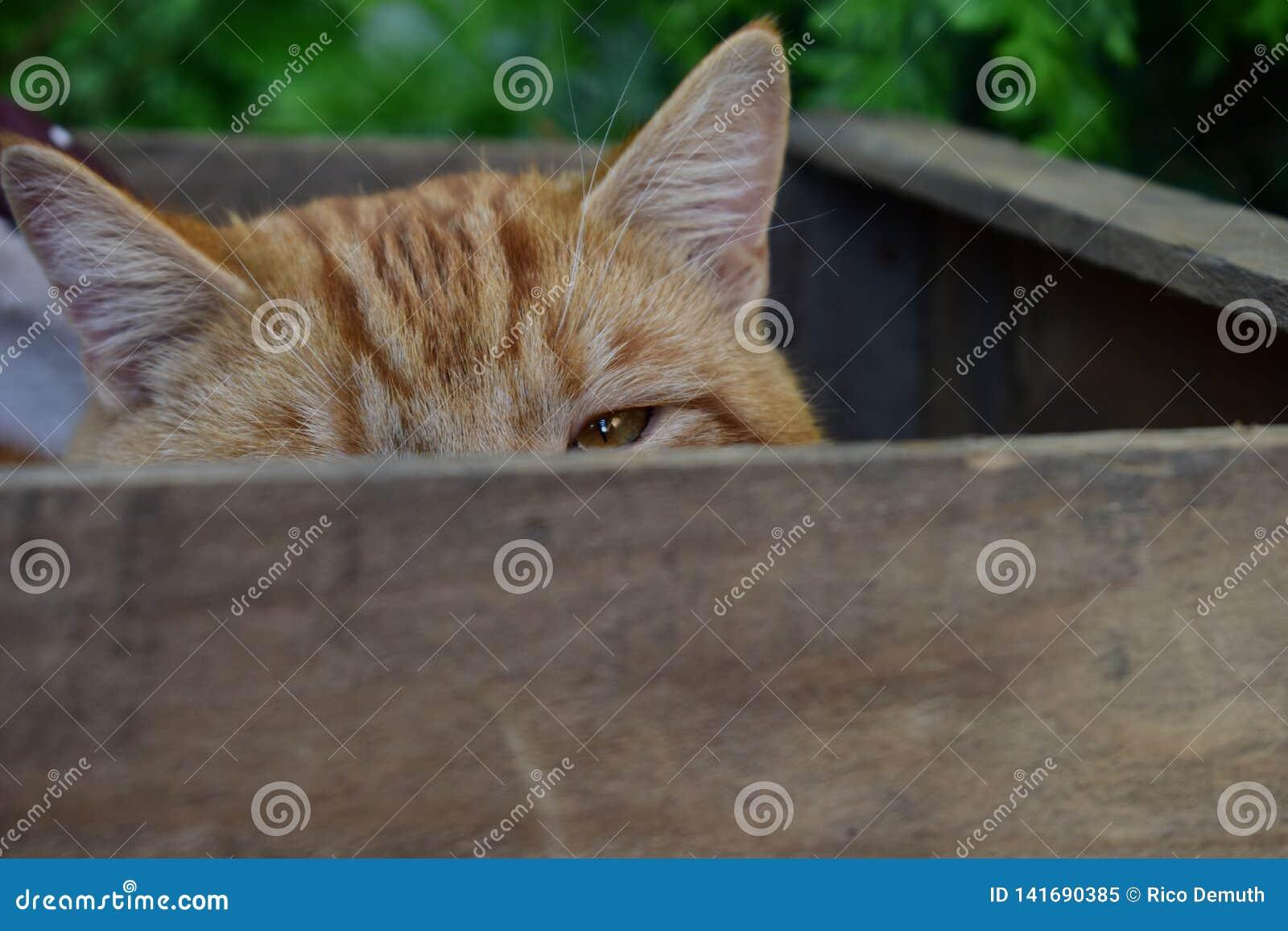 Gato en una caja de madera