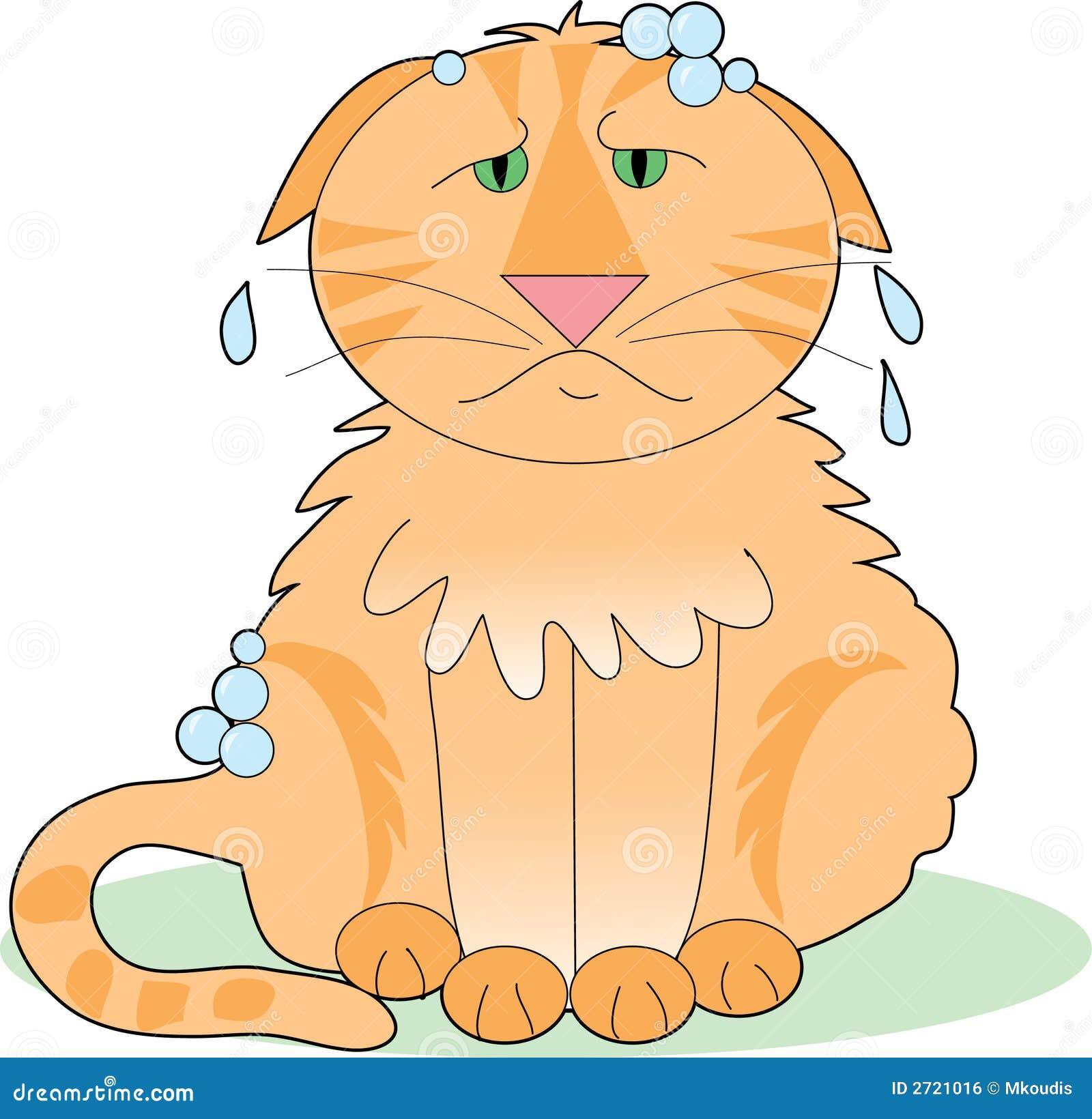 Gato ensaboado