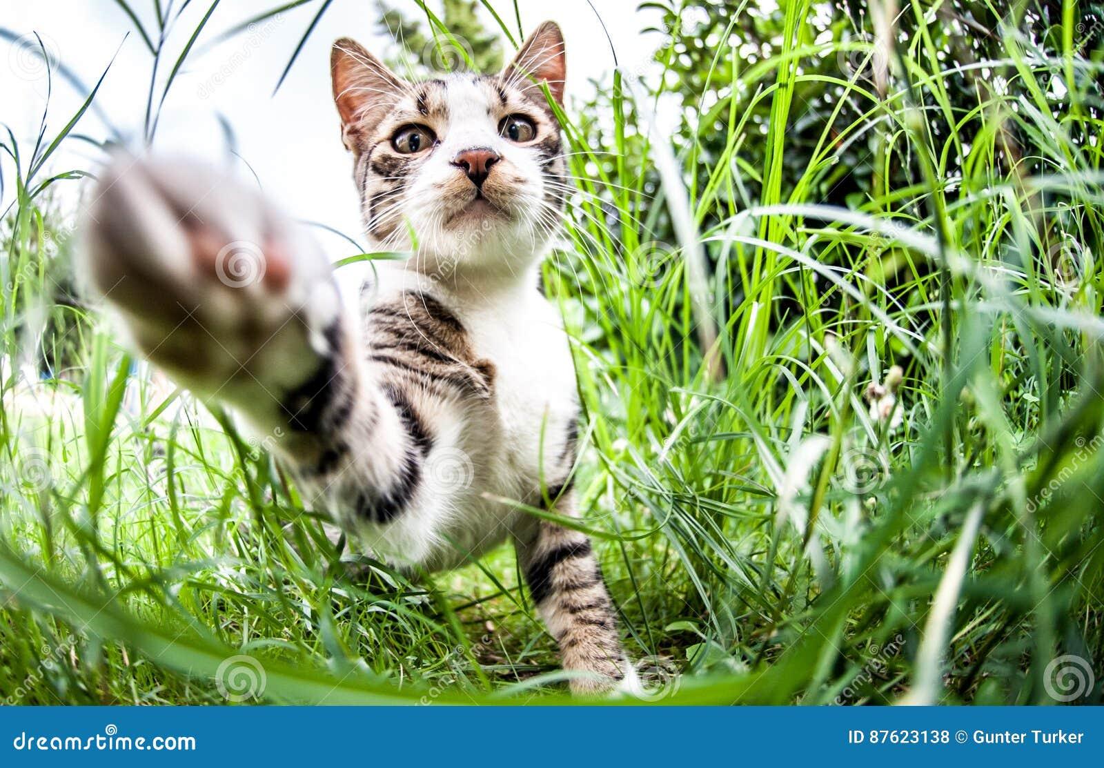Gato felino