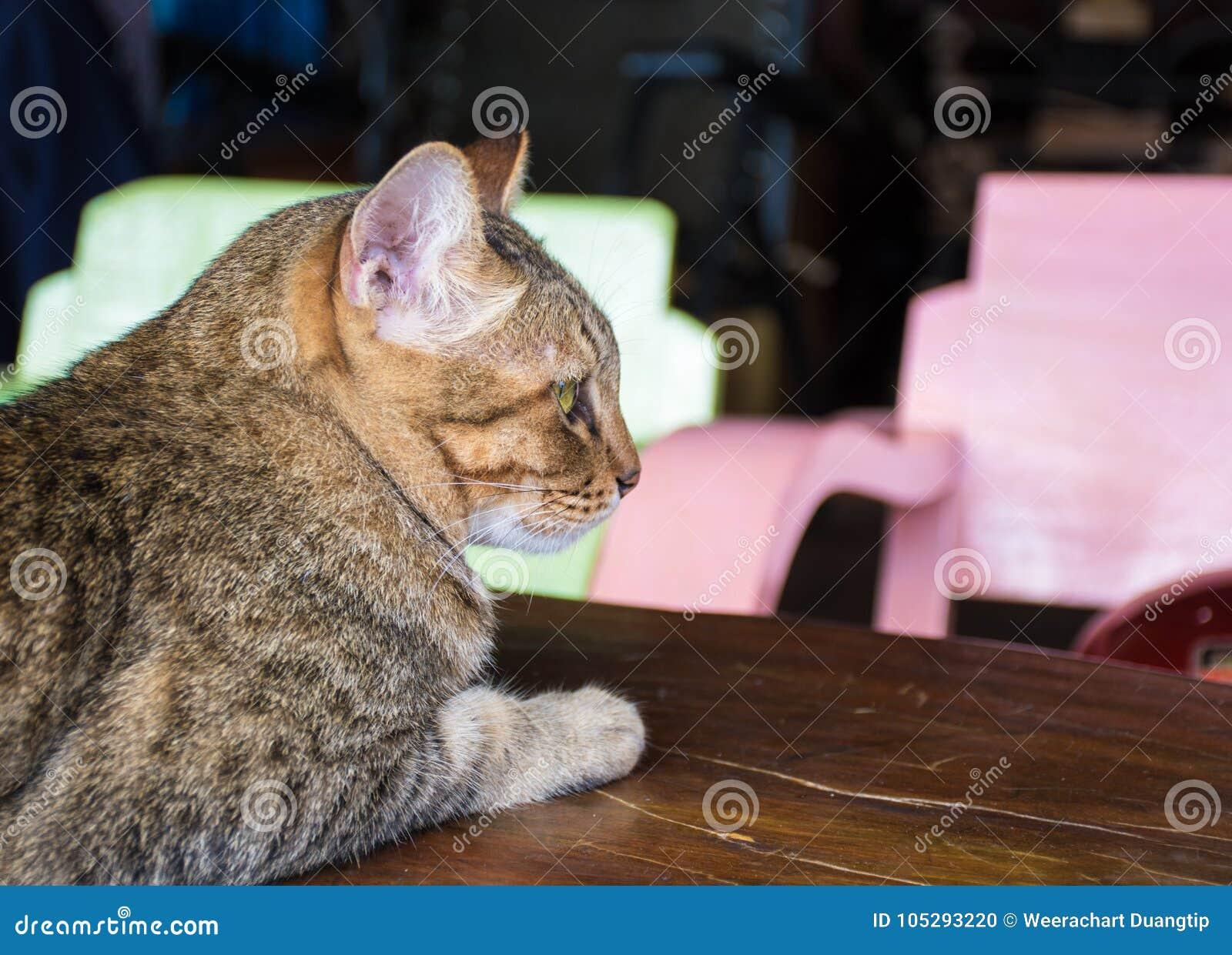 Gato felino en una casa