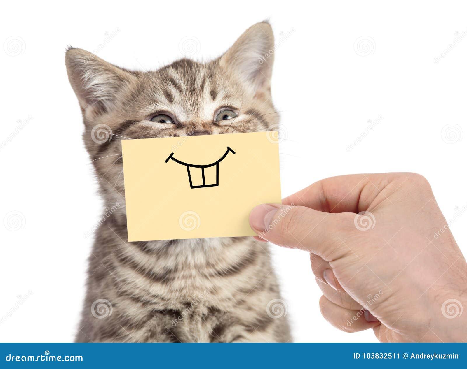 Gato feliz con sonrisa divertida en la cartulina aislada en blanco