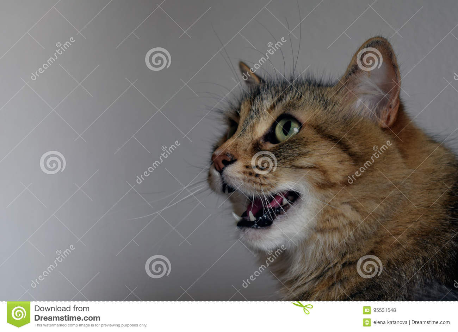 Gato femenino