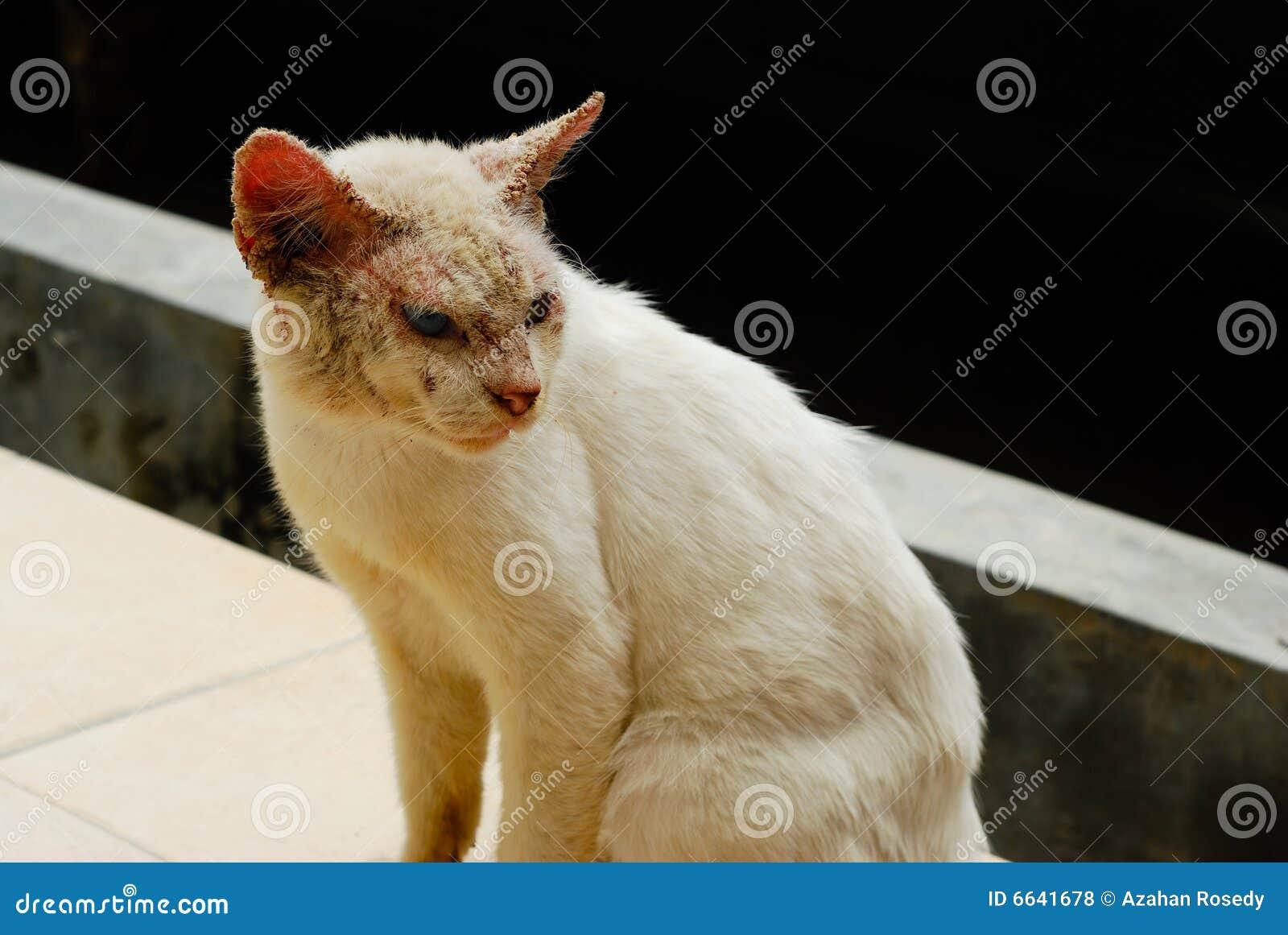 Gato feo con enfermedad de piel