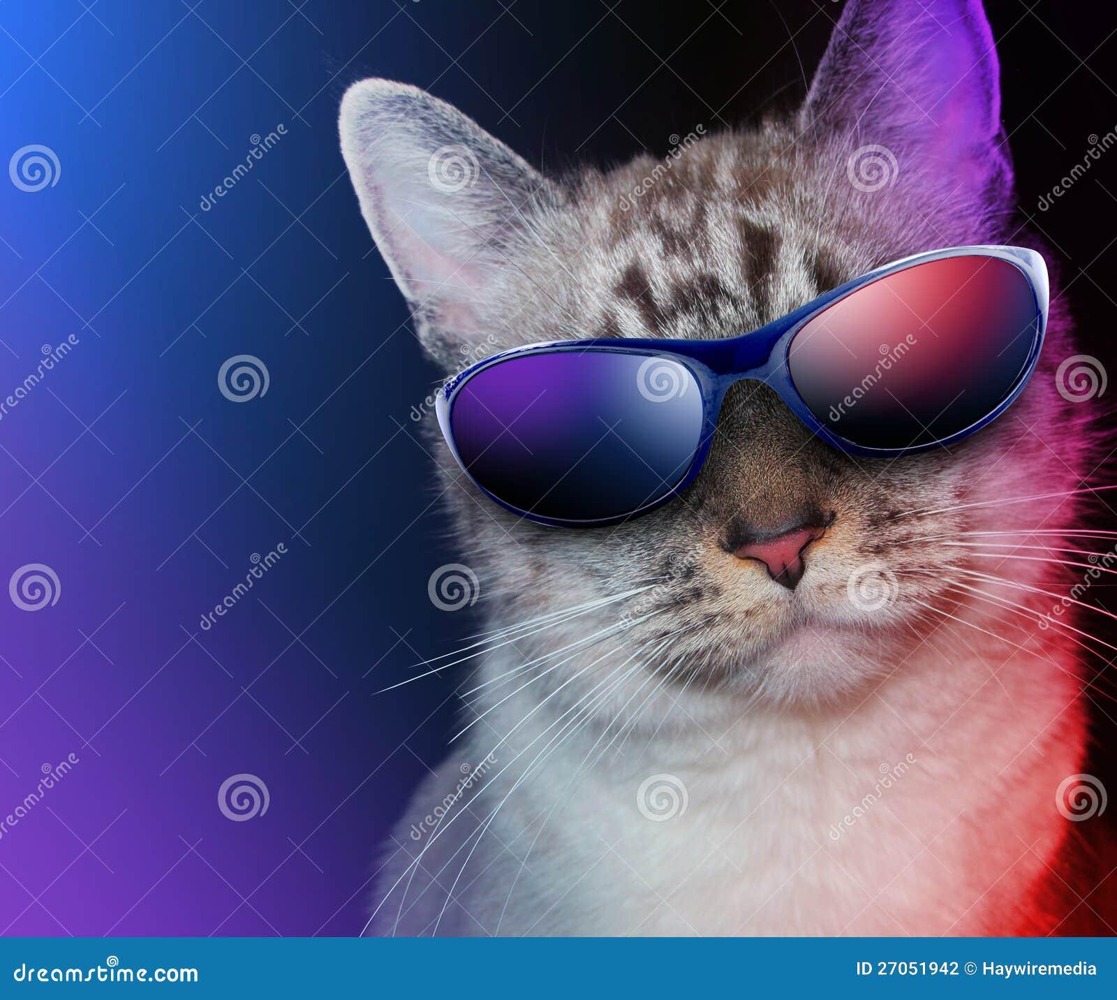 Archivo Gato Del Con De Sol Las Fresco Partido Gafas Foto WEH29ID