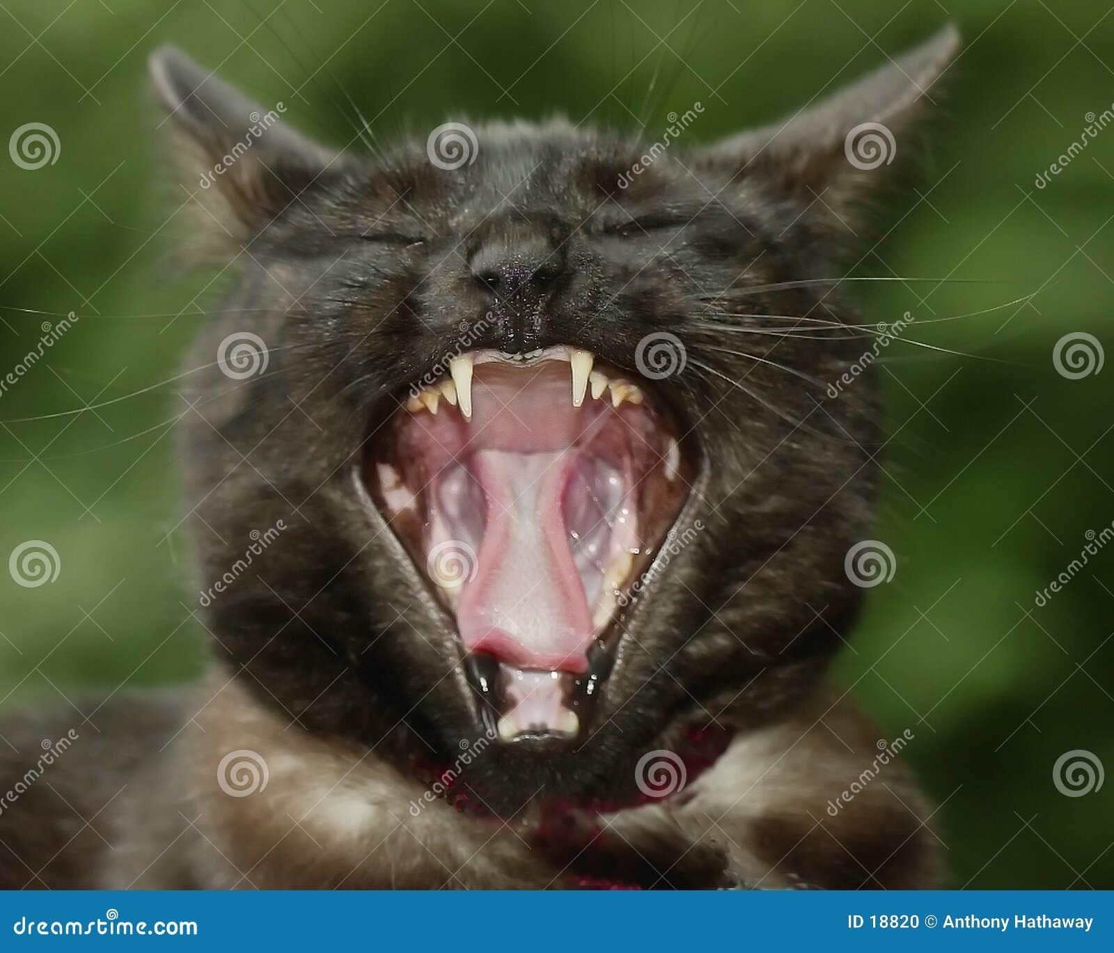 Gato furado